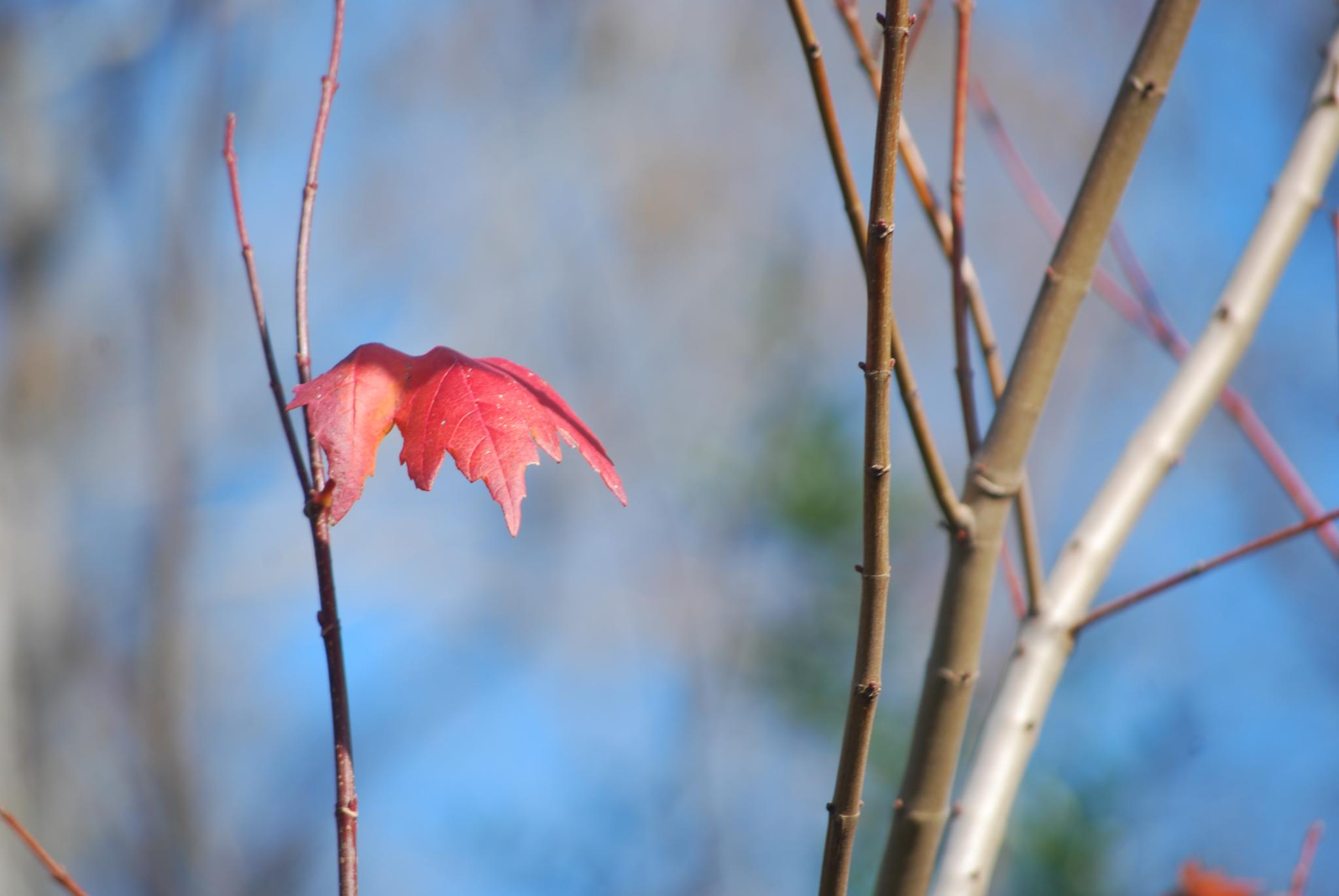 The Last Leaf by Bobby2