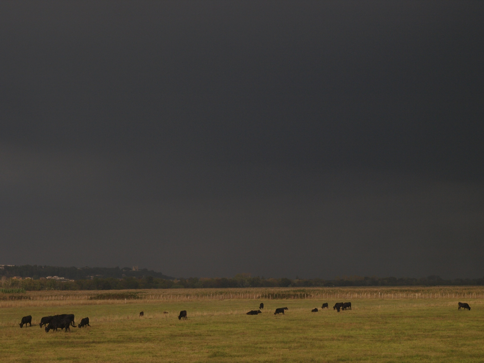 A stormy day on the countryside by antónio costa