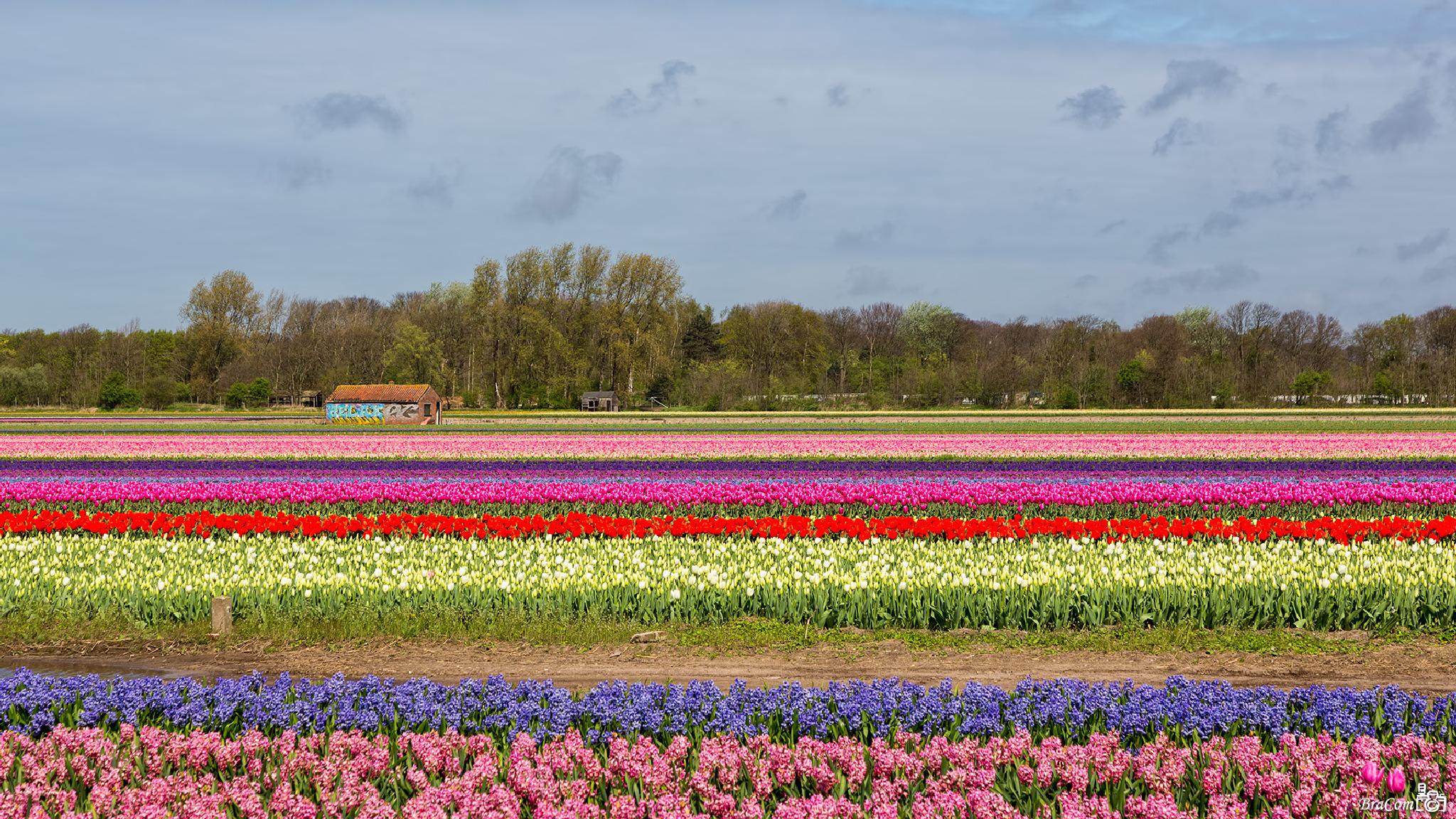 The colors of spring by Bram van Broekhoven