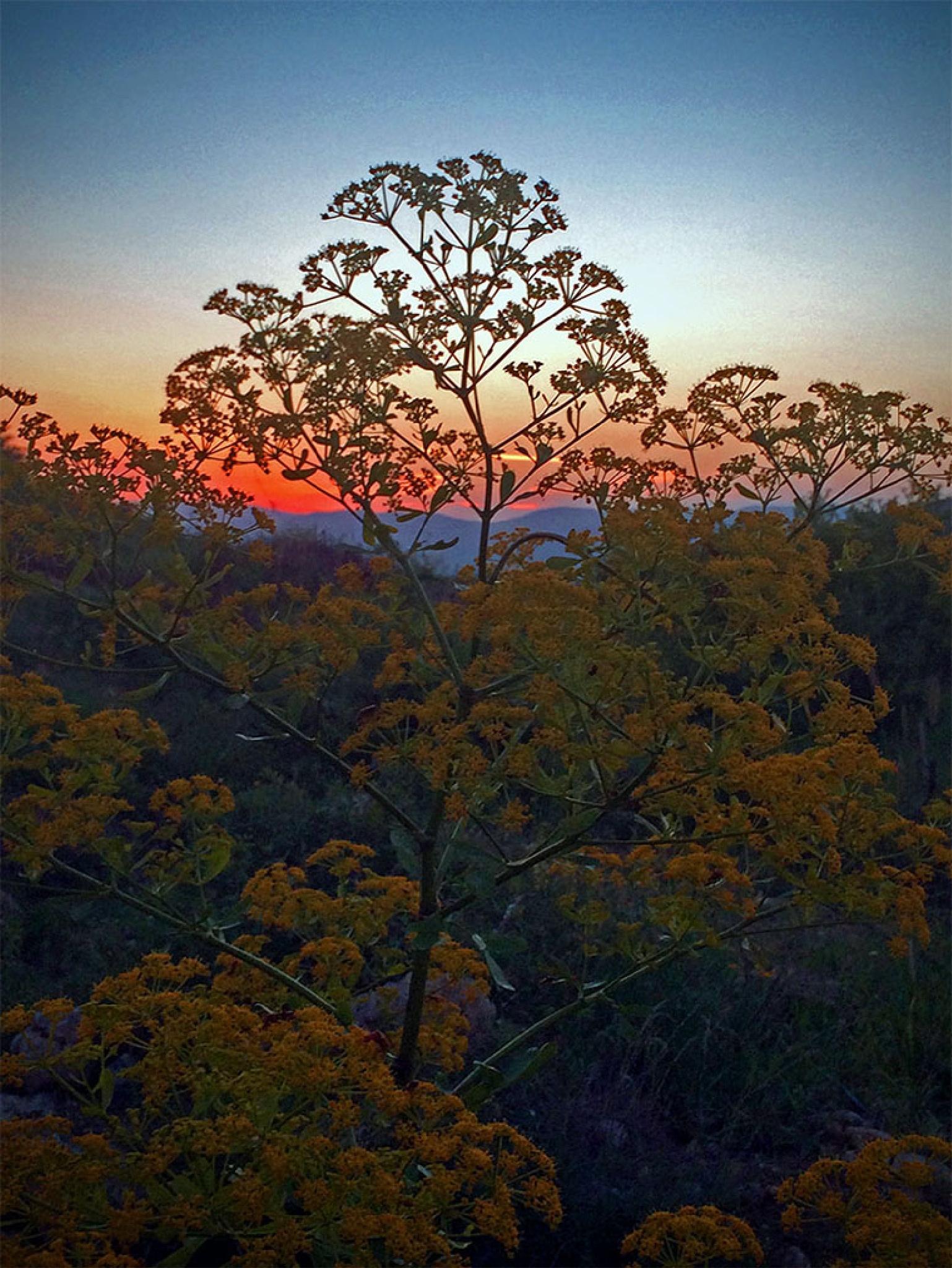 Sunset by farhad.mukryani