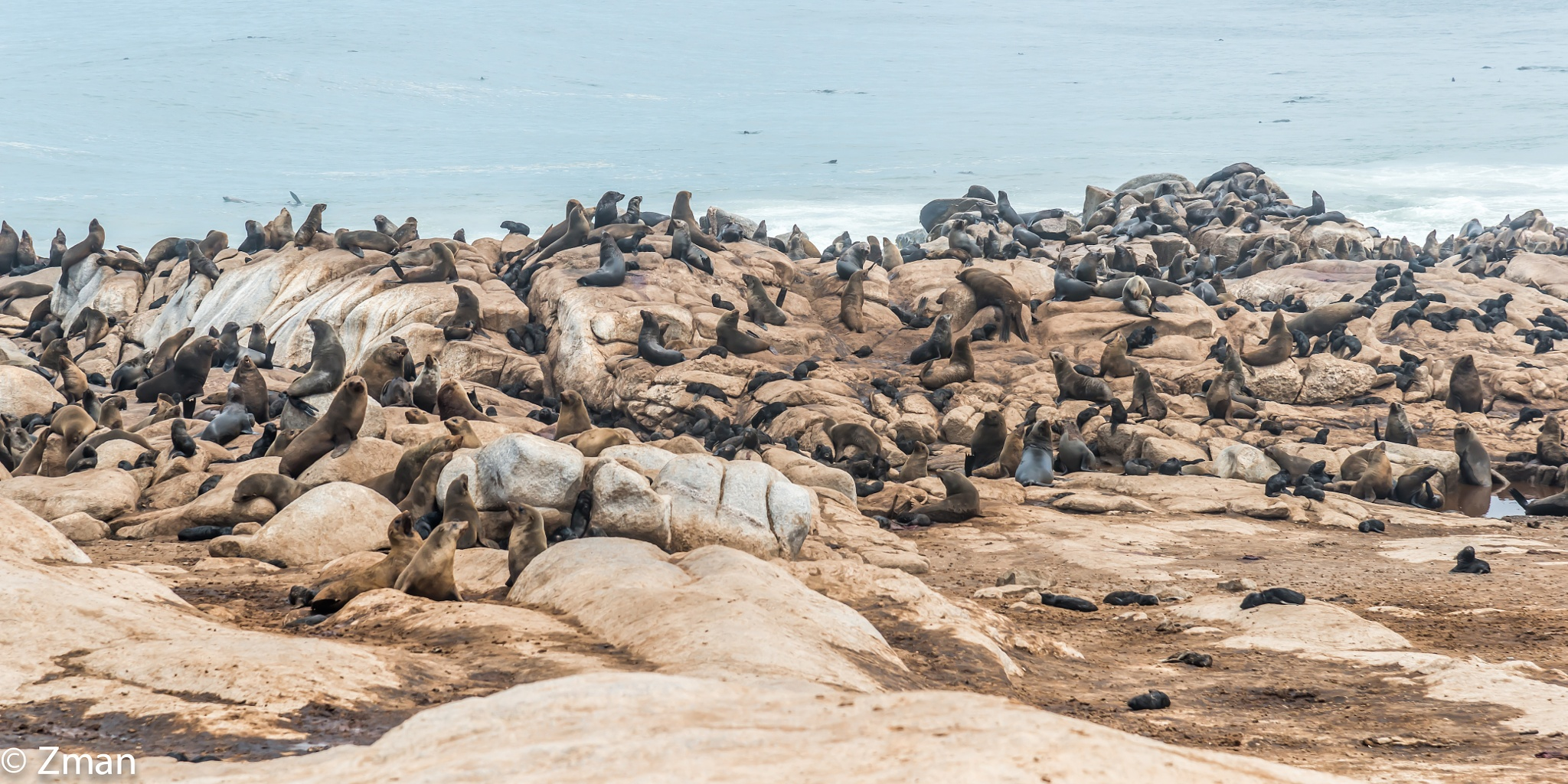 The Seal Colony by muhammad.nasser.963
