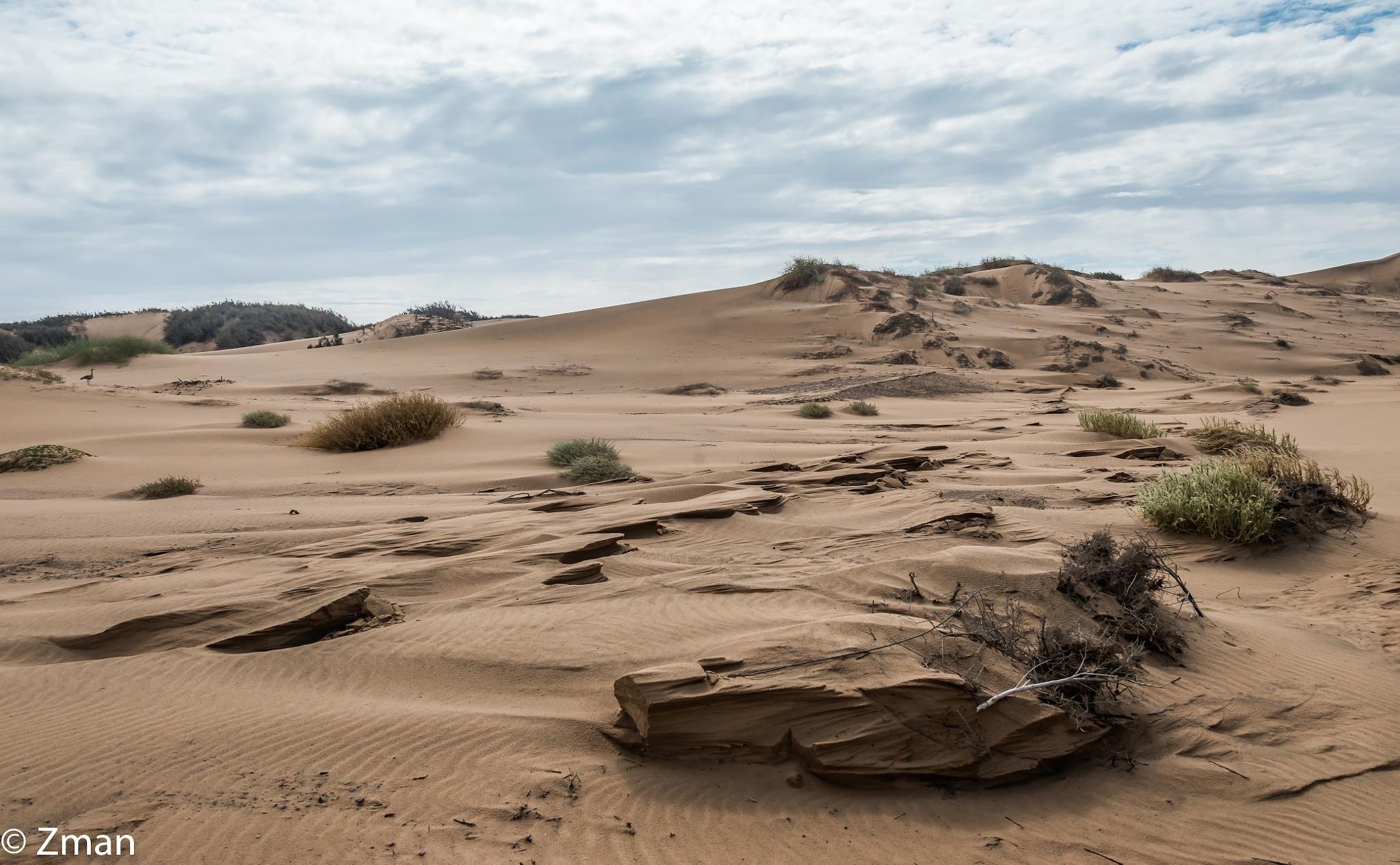 Raw Desert by muhammad.nasser.963
