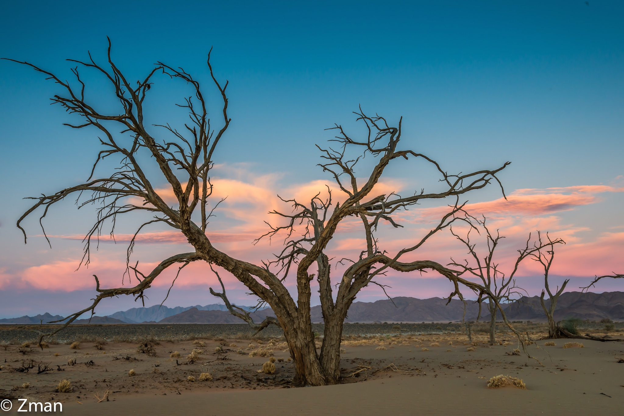 Acacia Trees at Sunset 01 by muhammad.nasser.963