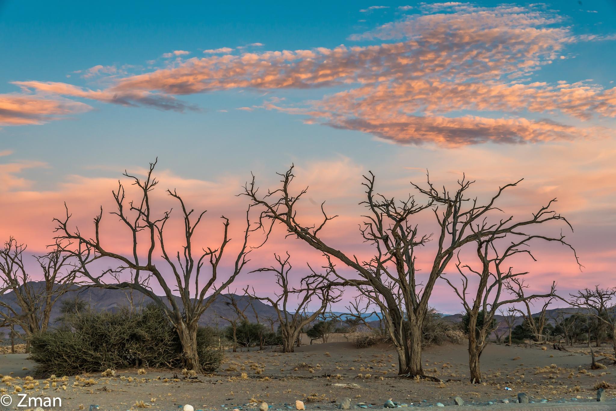Acacia Trees at Sunset 02 by muhammad.nasser.963