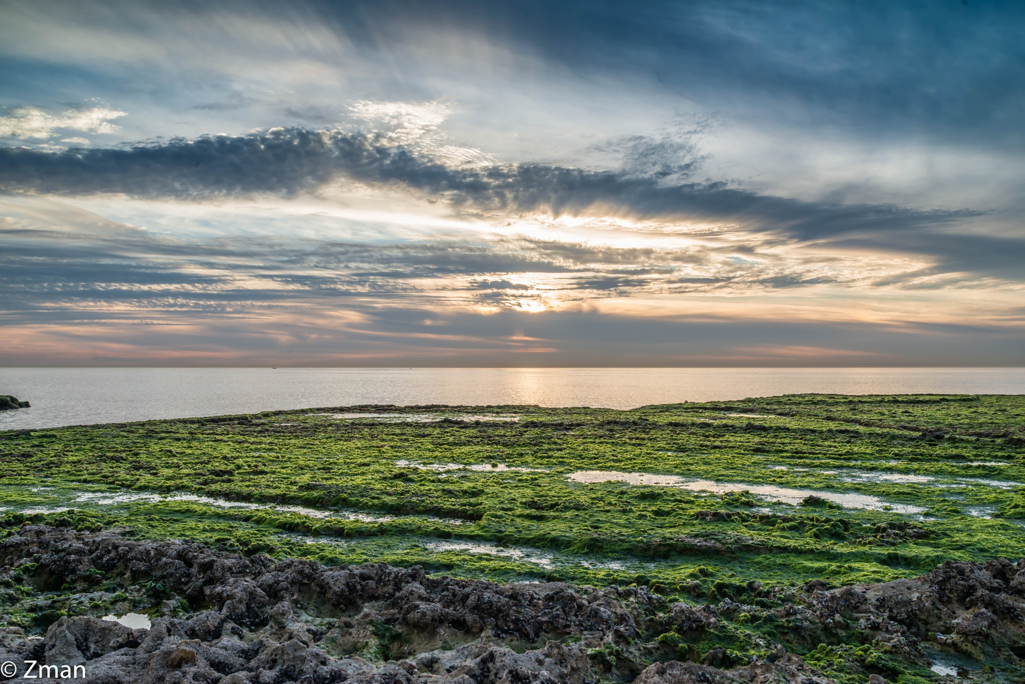 Sea Weeds at Aldalia at Sunset by muhammad.nasser.963