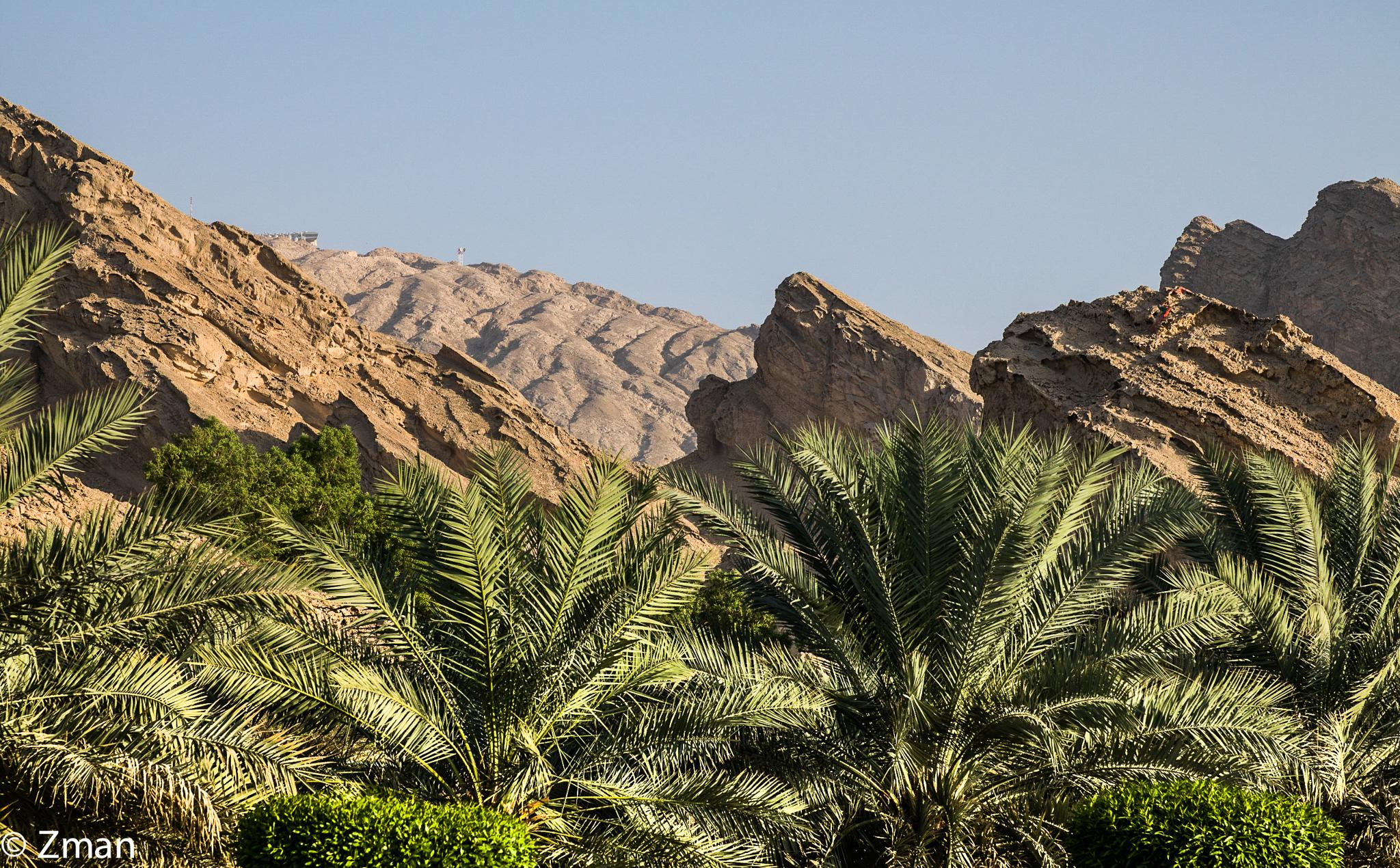 Palm Trees at Jabel Hafeet by muhammad.nasser.963