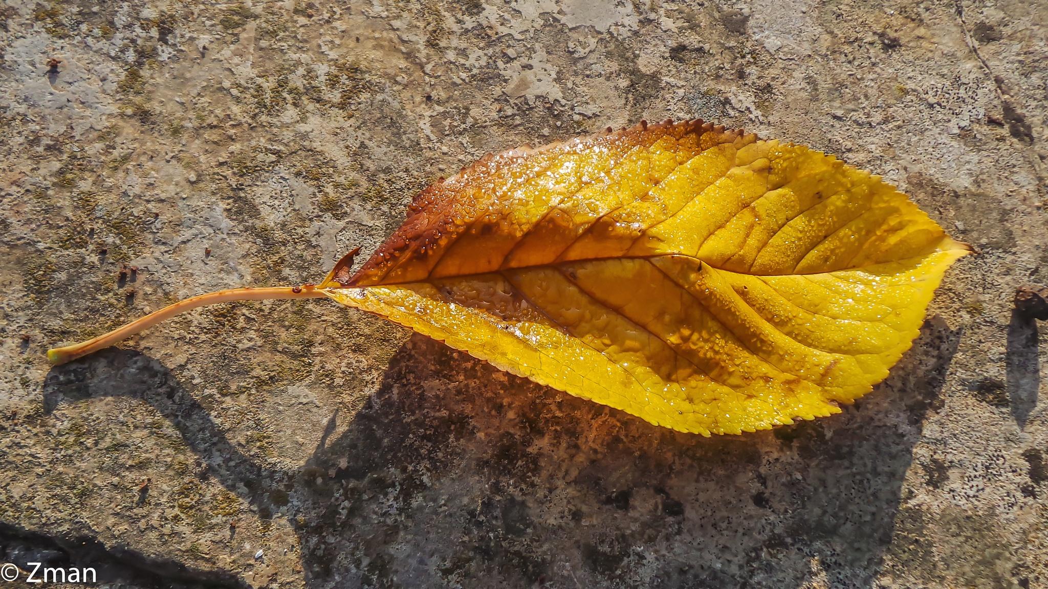 Fallen Leaf by muhammad.nasser.963