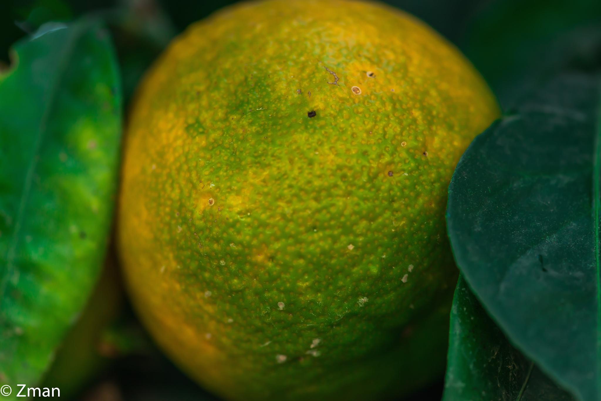 Orange Still on the Tree by muhammad.nasser.963