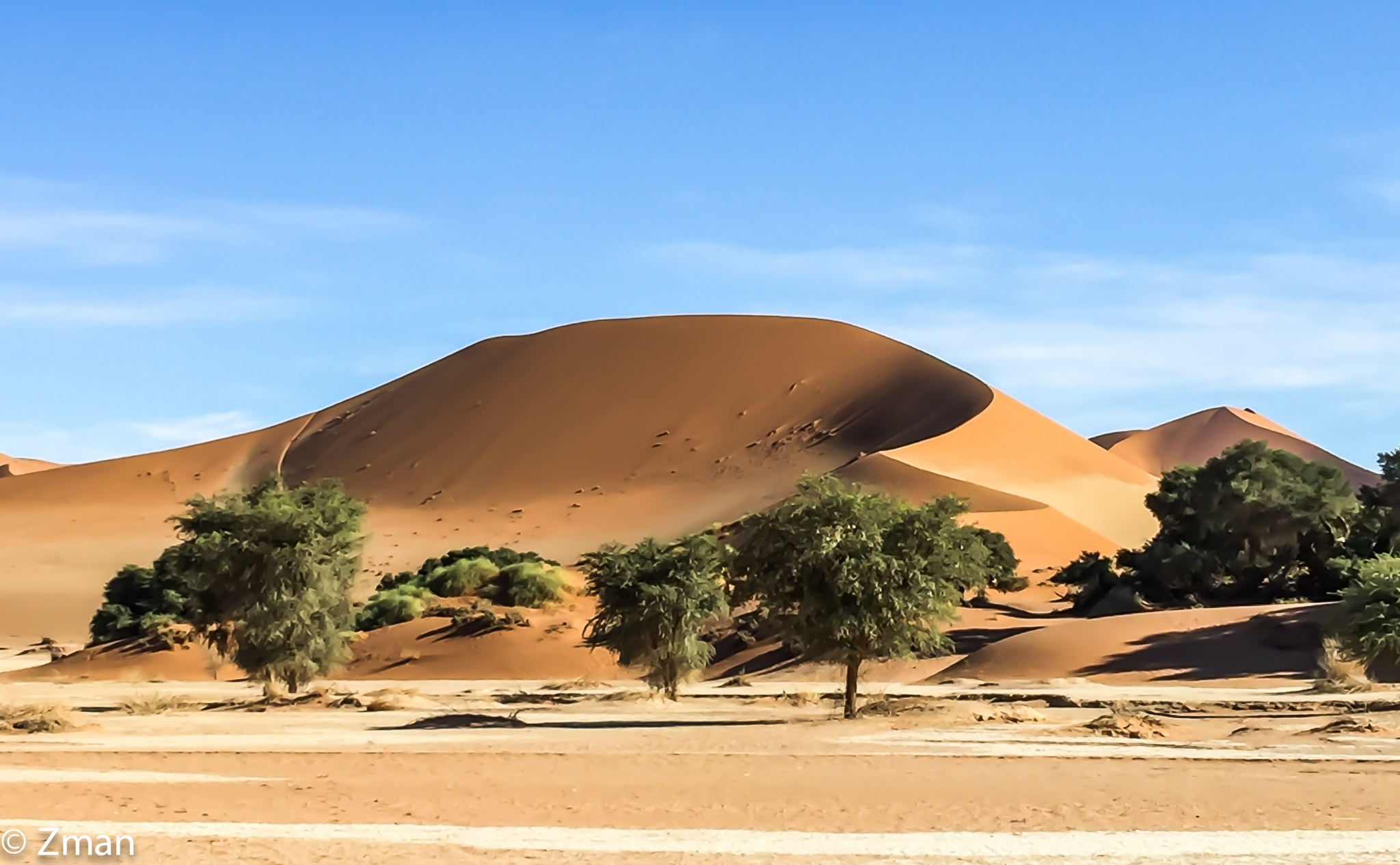 Sand Dunes and Acacia Trees by muhammad.nasser.963