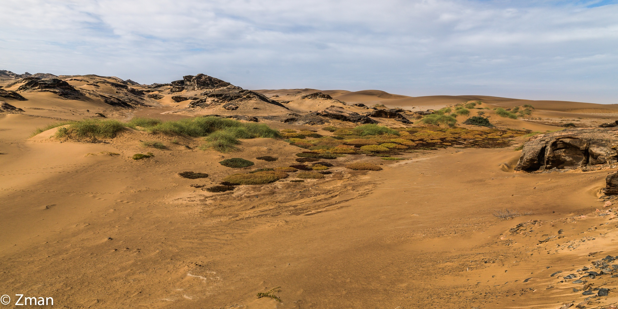 Desert Life Florishing by muhammad.nasser.963