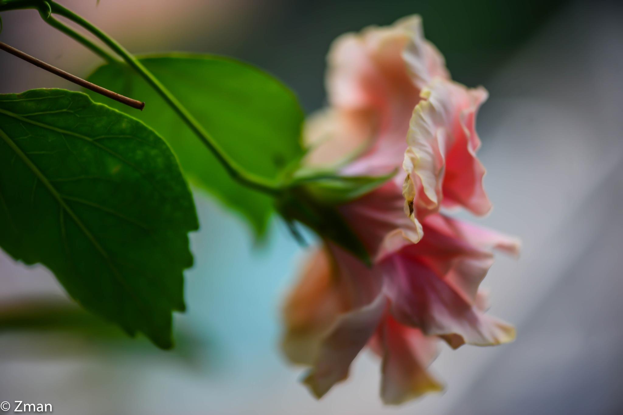 Pink by muhammad.nasser.963