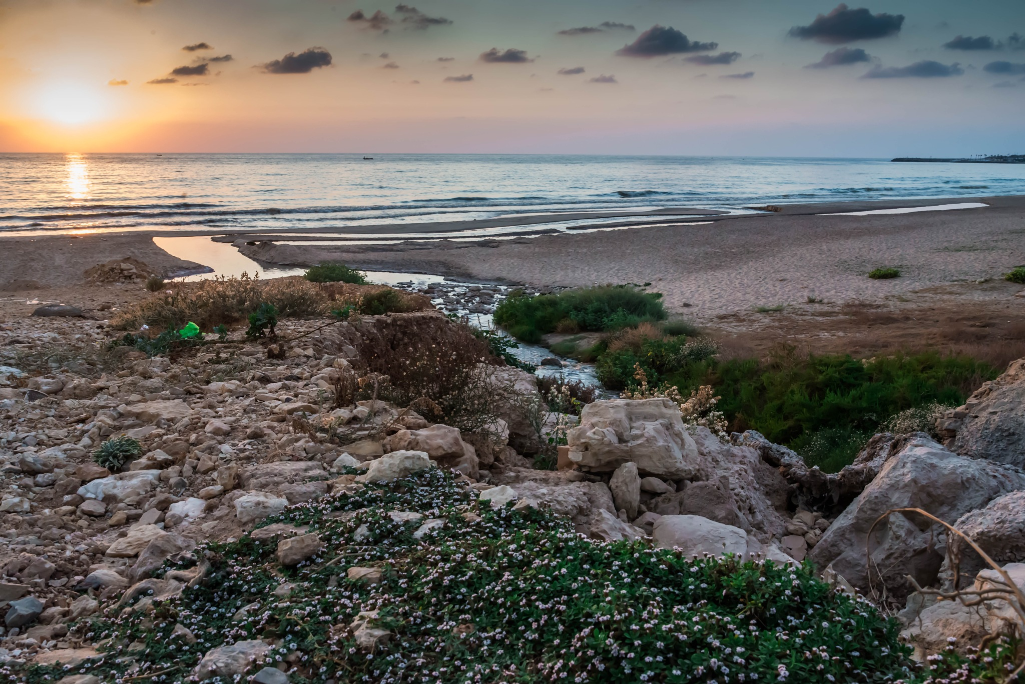 Sunset, Plants and outfall by muhammad.nasser.963