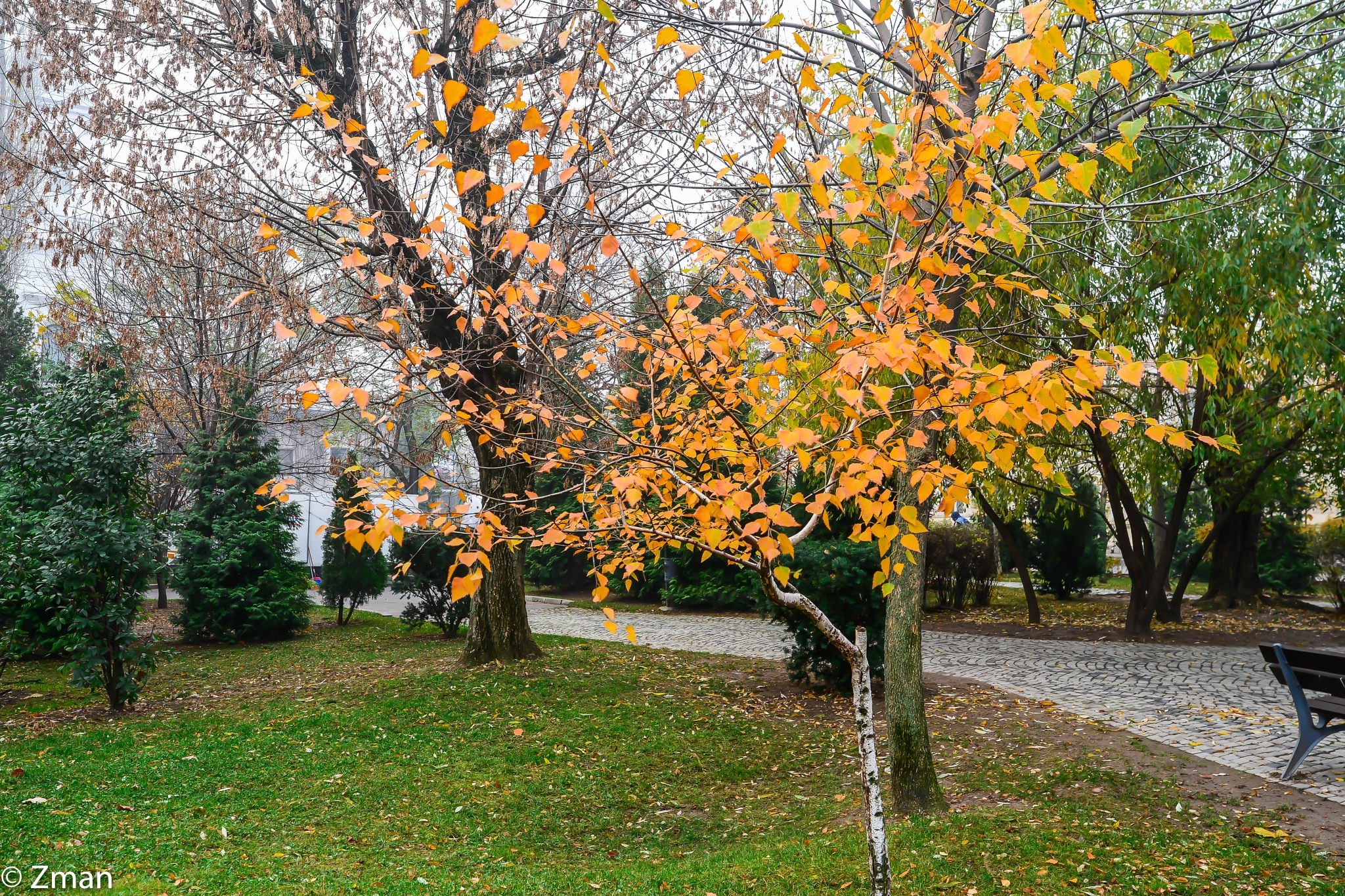 Colours Of Autumn by muhammad.nasser.963