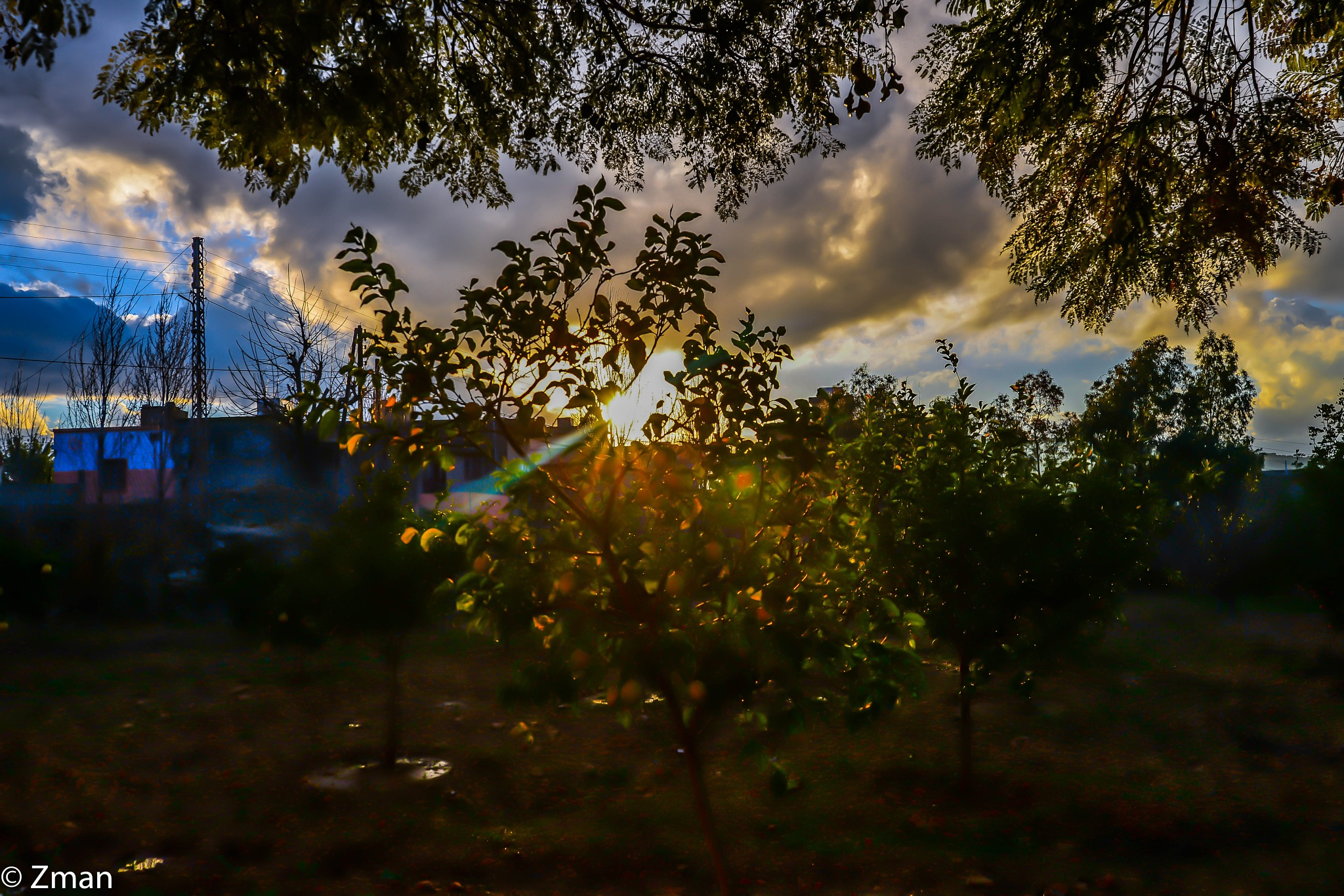 Lemon Tree and Sunrays by muhammad.nasser.963