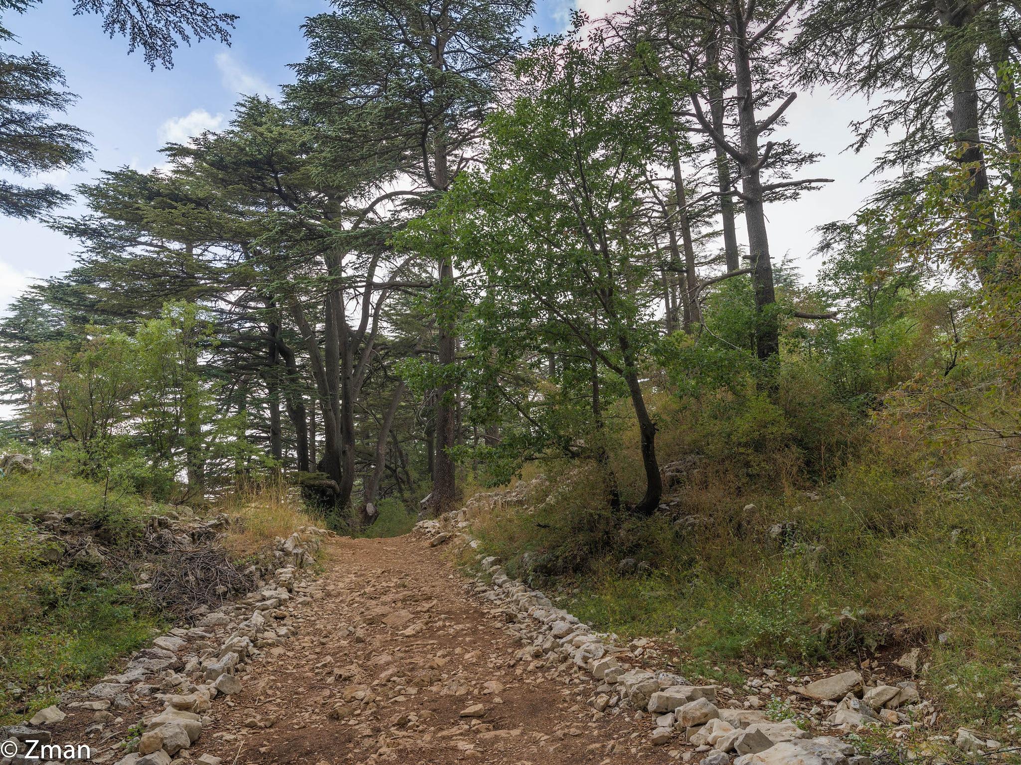 Cedars Of Tanourin by muhammad.nasser.963