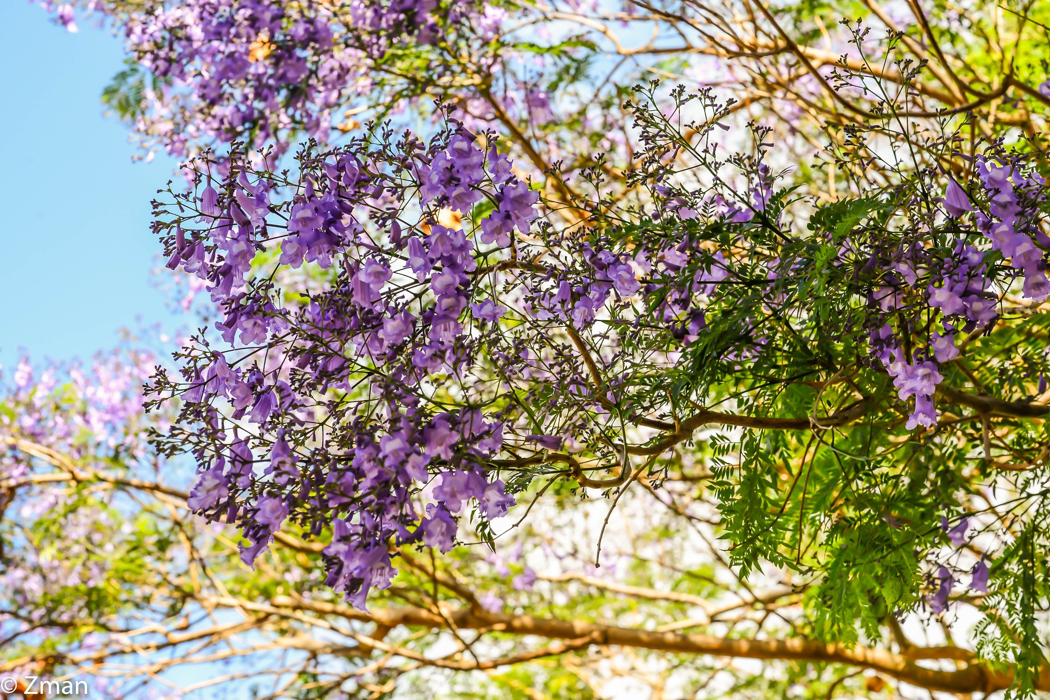 Purple Tree by muhammad.nasser.963