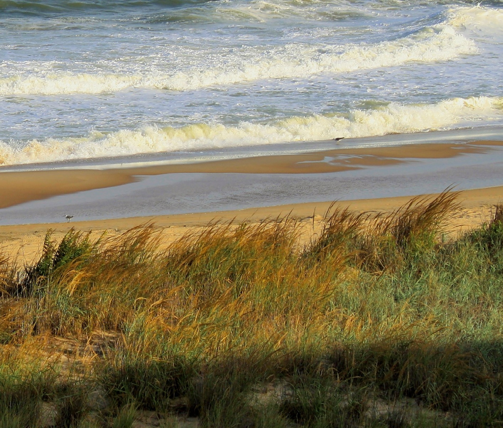 Warmth Grass and Surf by joann.kunkle