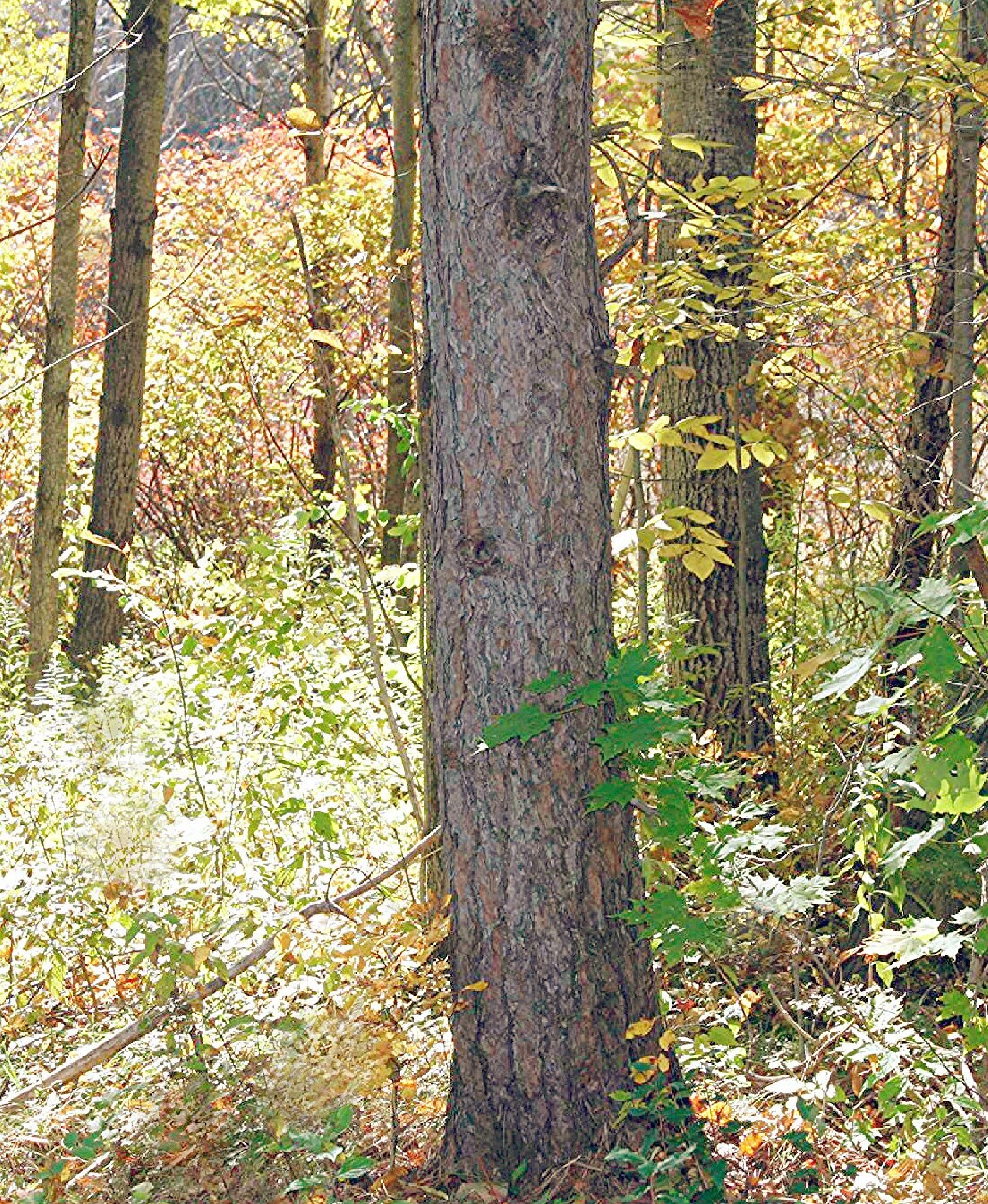 Woods by joann.kunkle