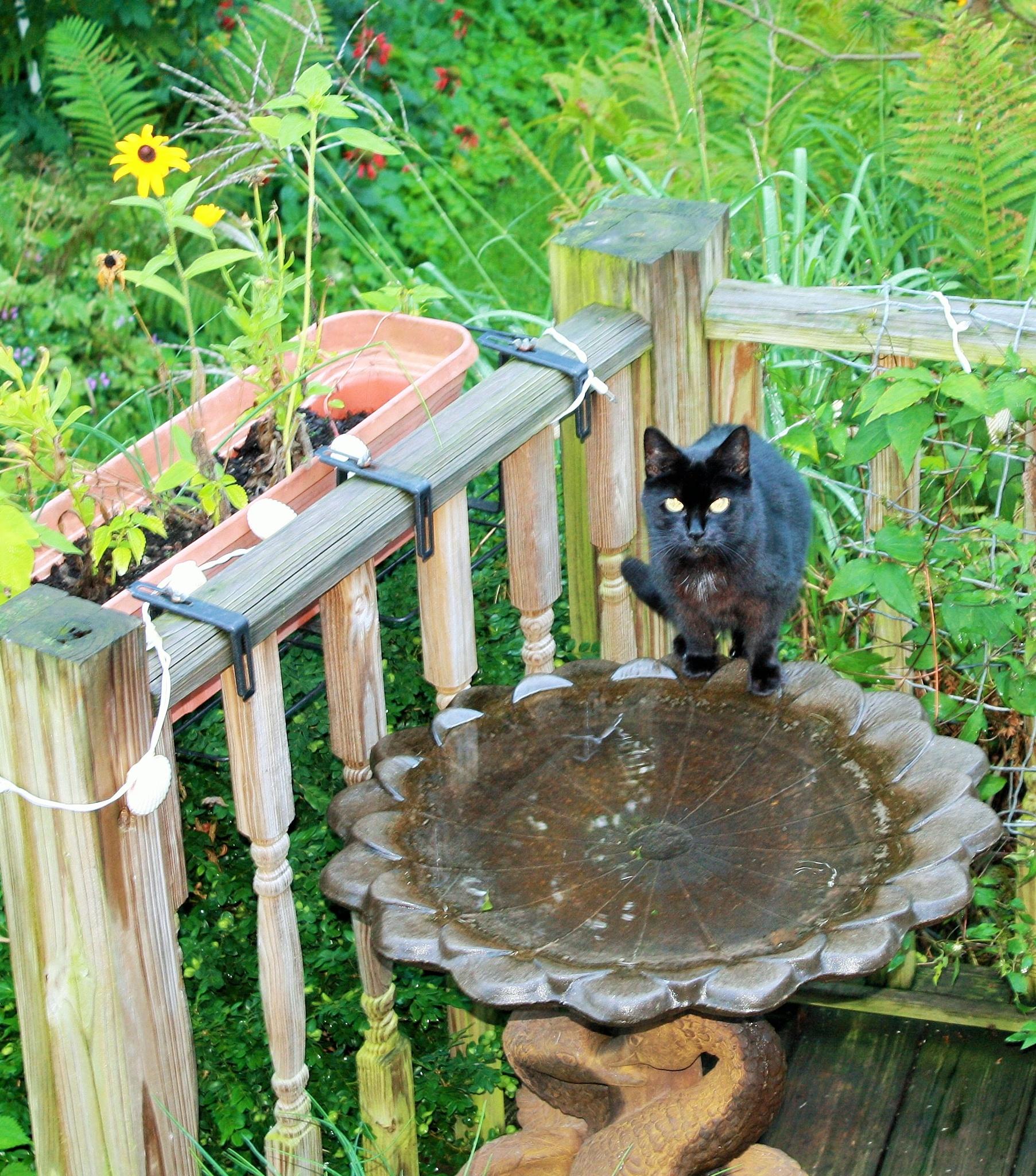 Cat in a Bath by joann.kunkle