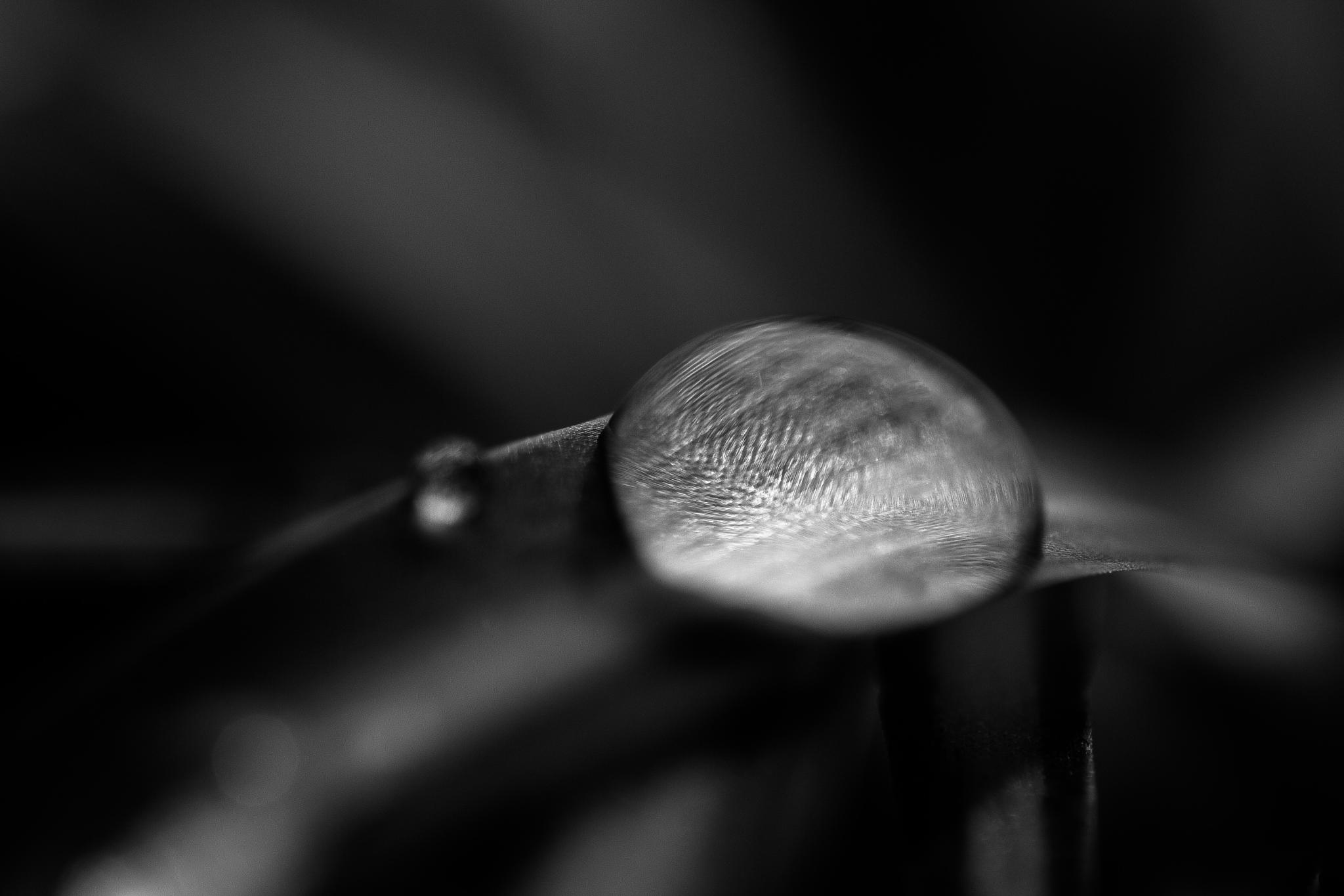 just a drop by Markus Koenigsbeck