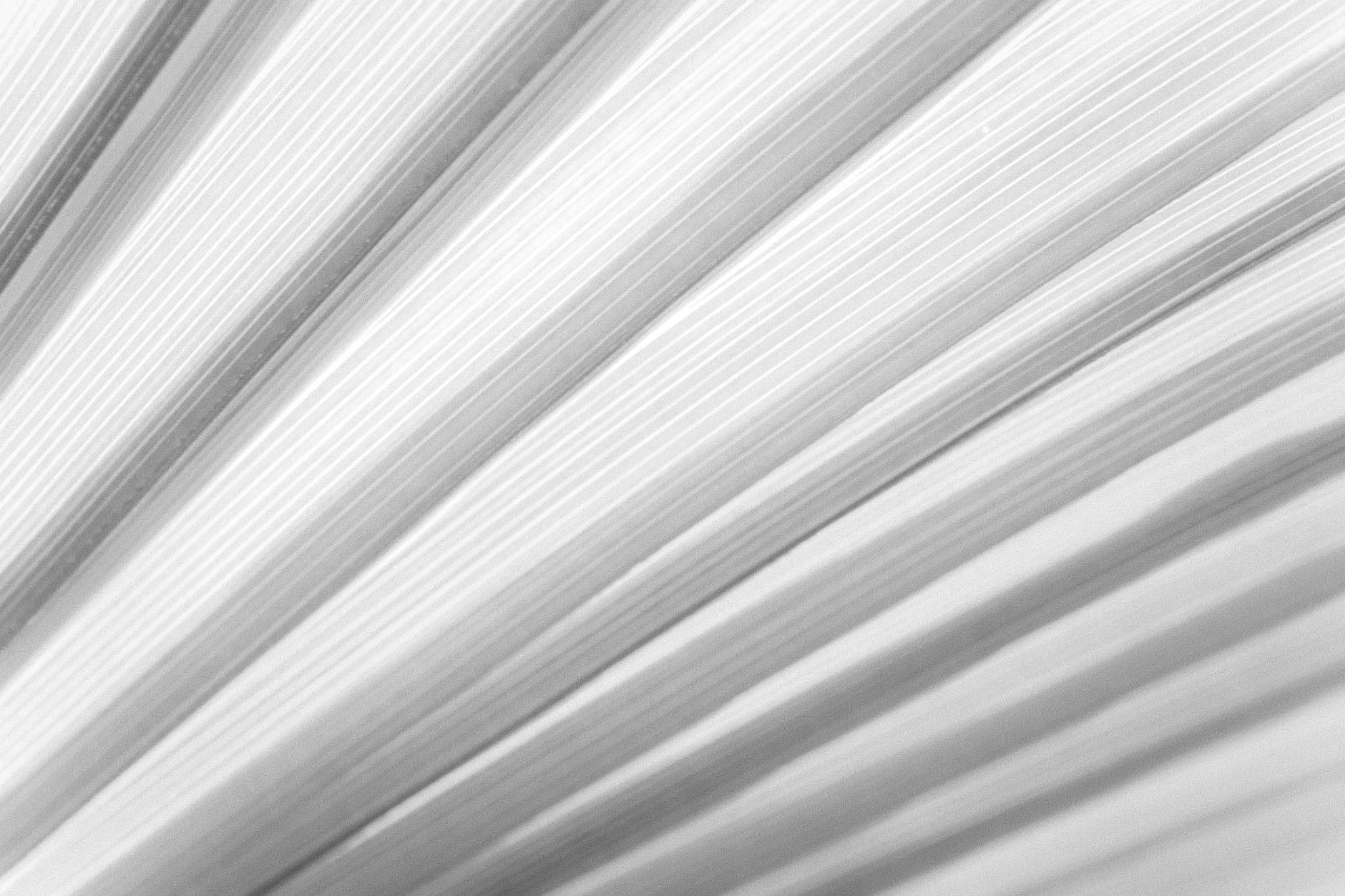pinstripes by Markus Koenigsbeck