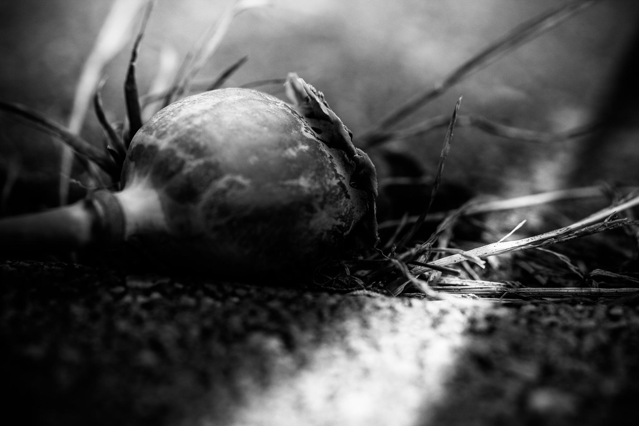 dashed to the ground by Markus Koenigsbeck