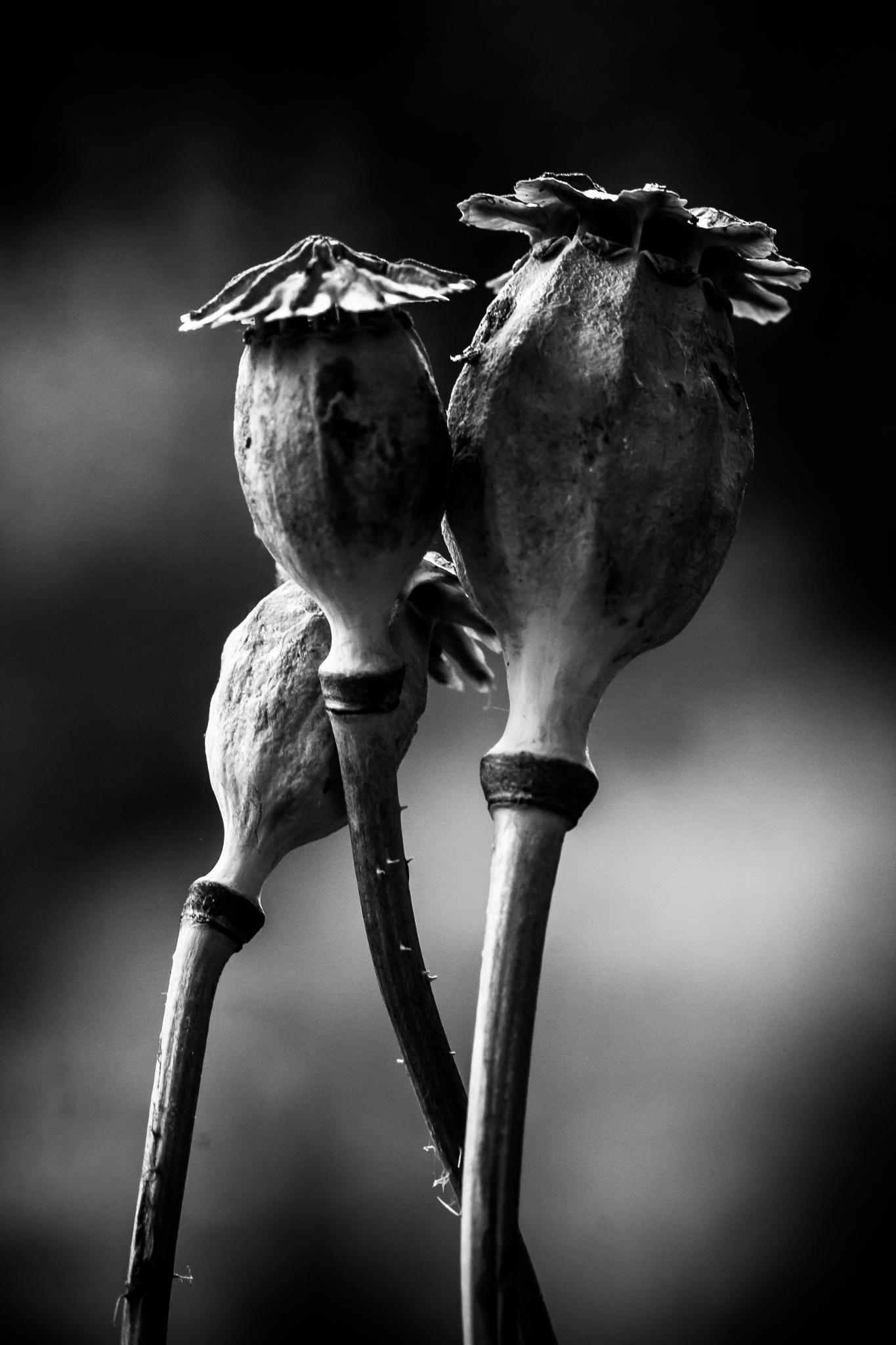 ménage a trois by Markus Koenigsbeck