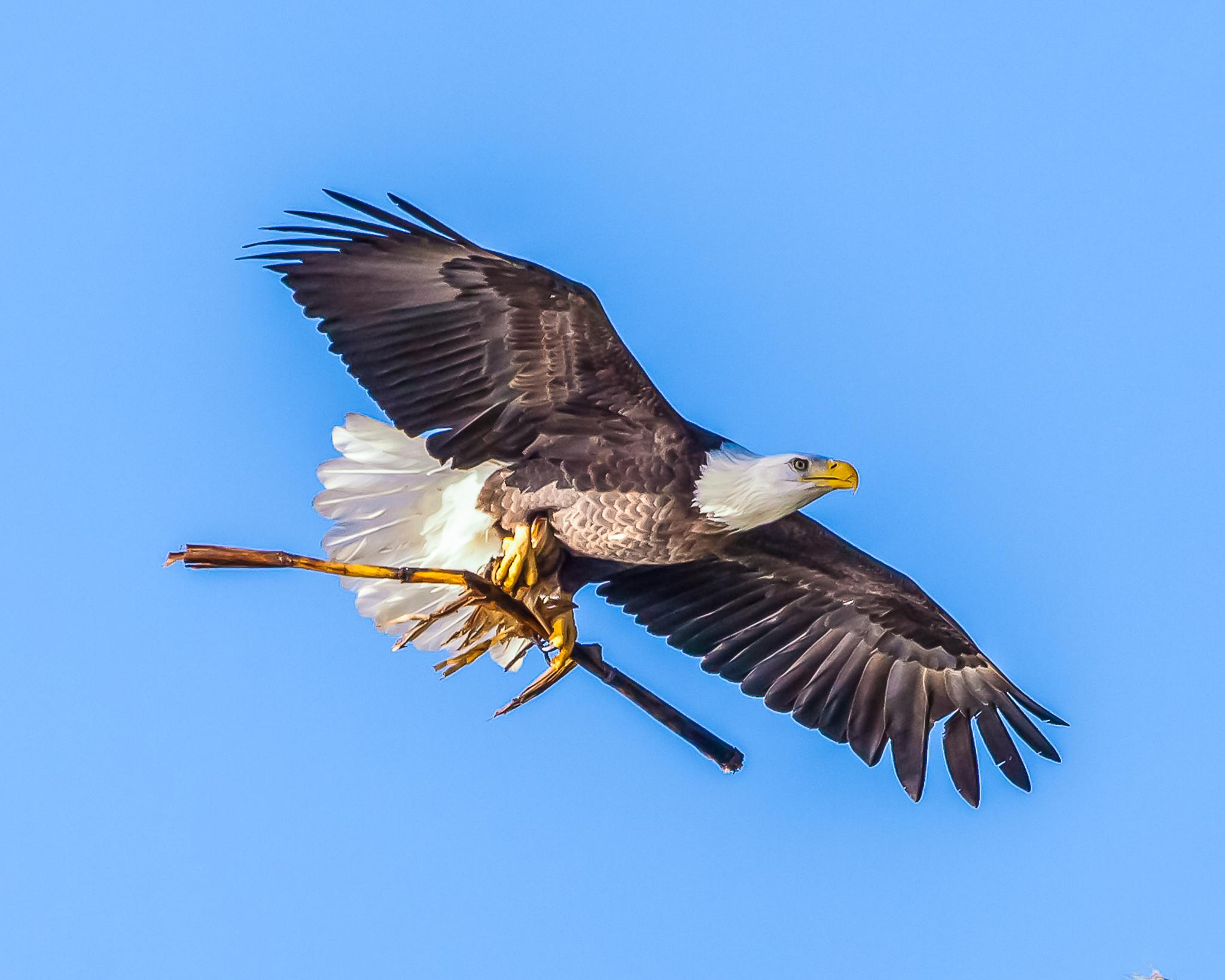 Freedom by burchphotography