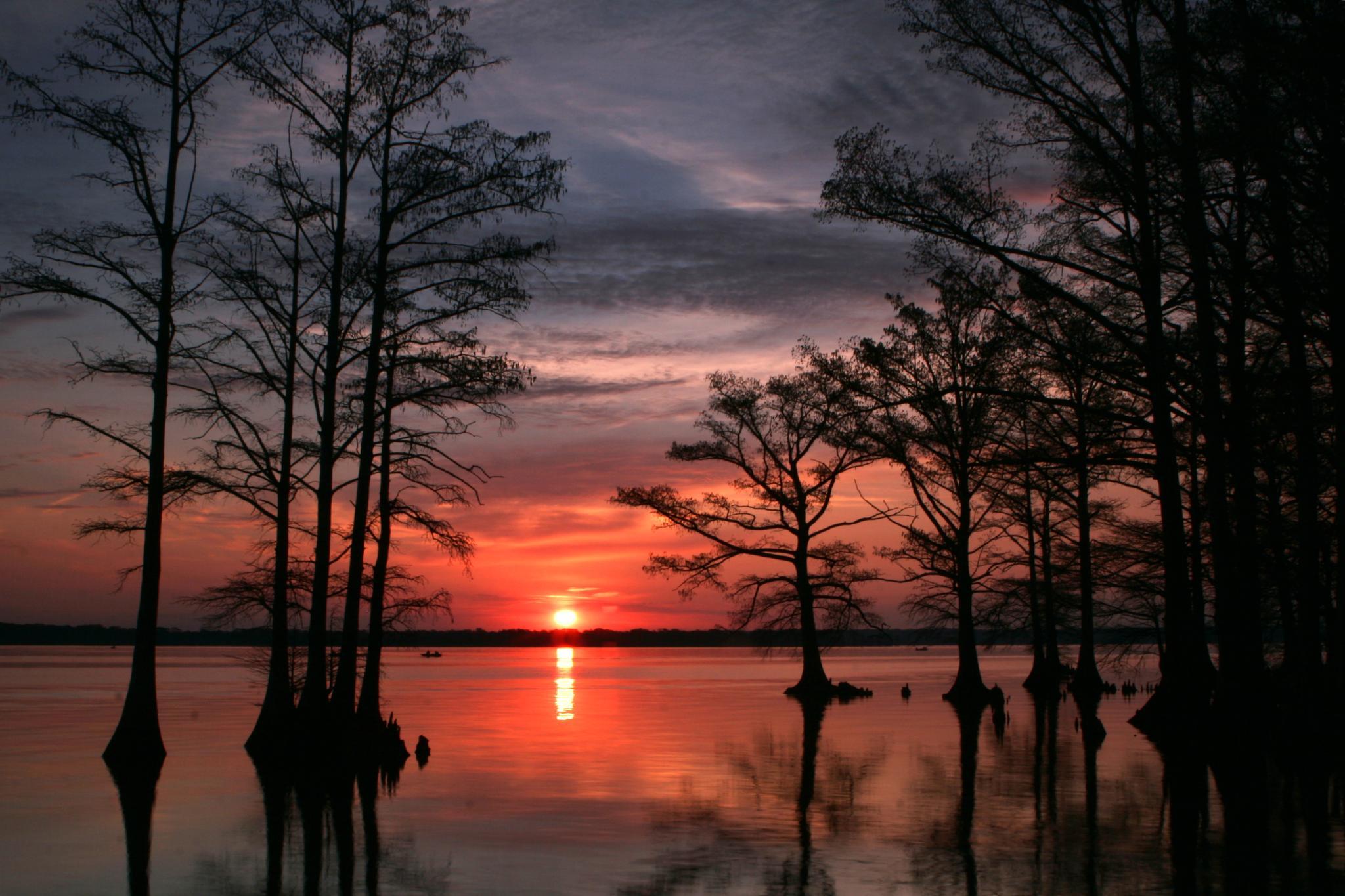 Photo in Landscape #reelfoot lake