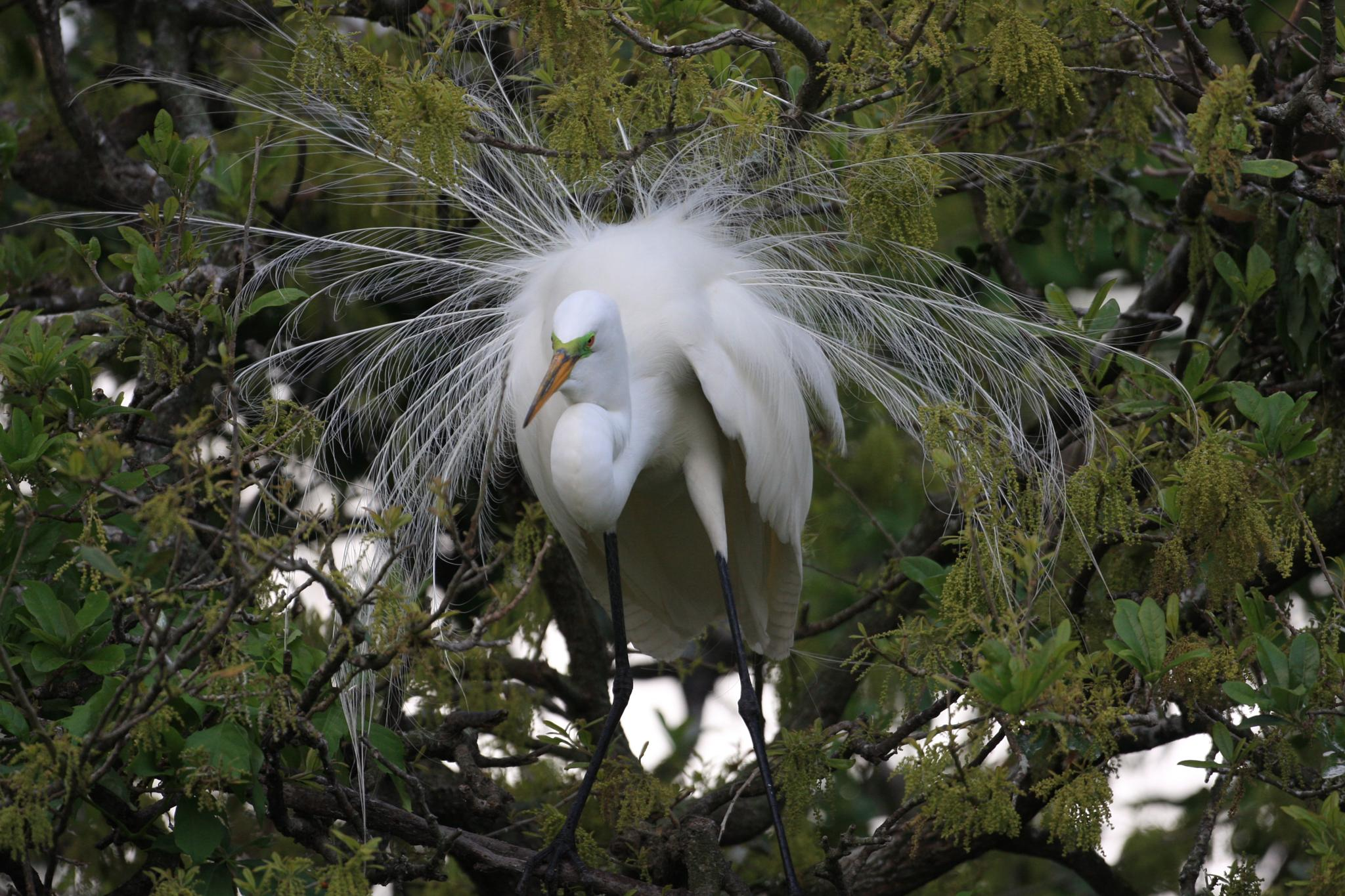 Photo in Animal #florida everglades