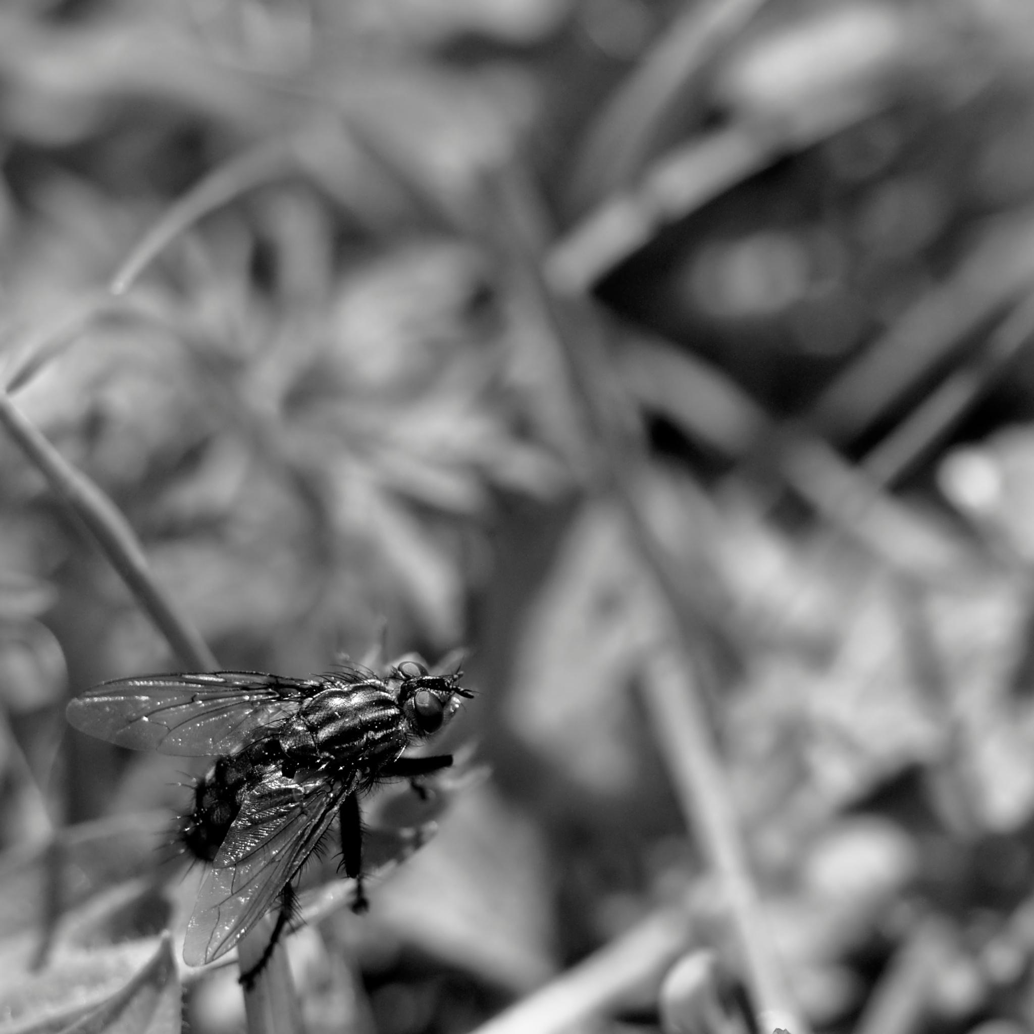 Photo in Black and White #macro