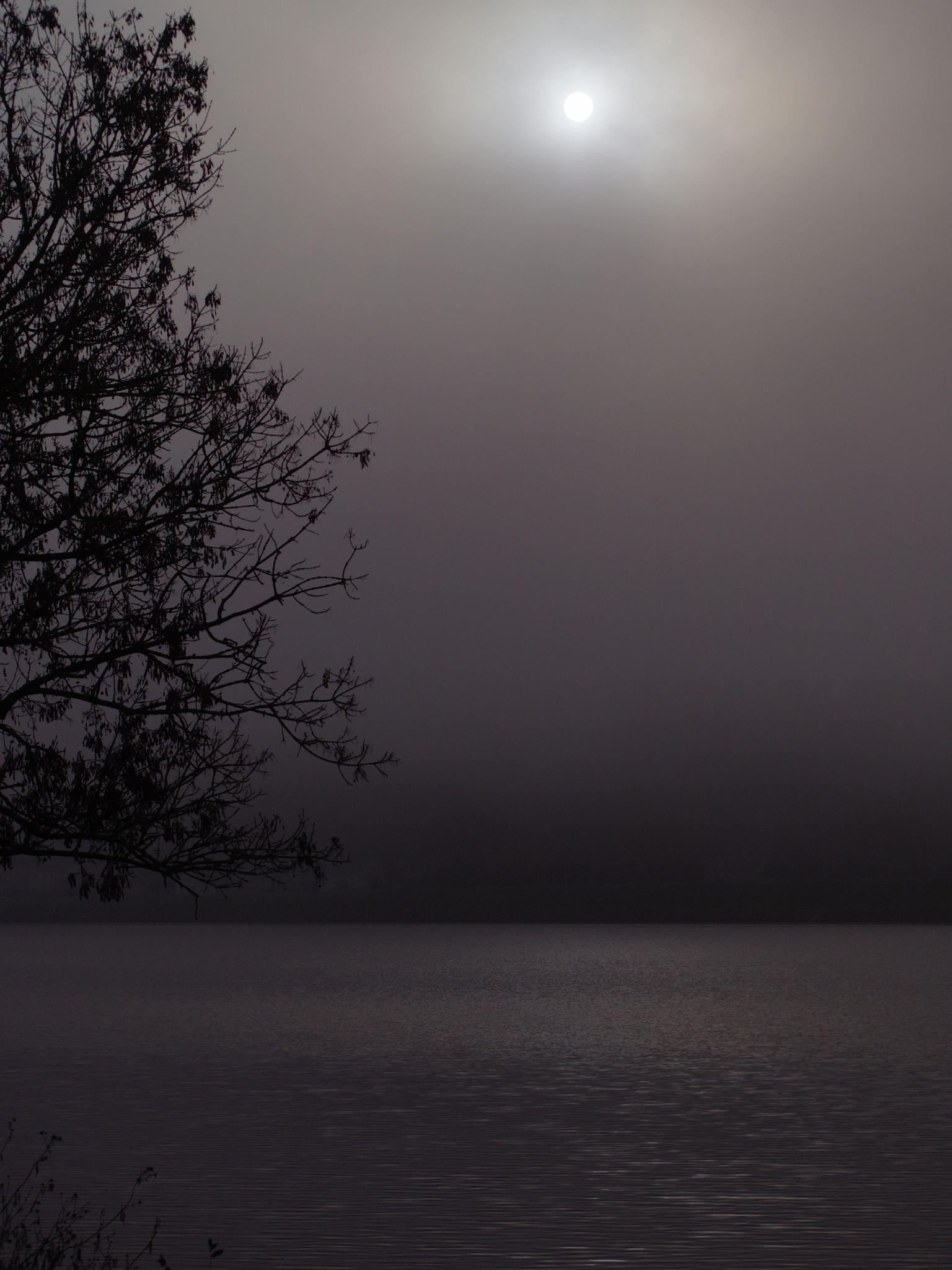 Misty Morning by Jean Michel Segaud