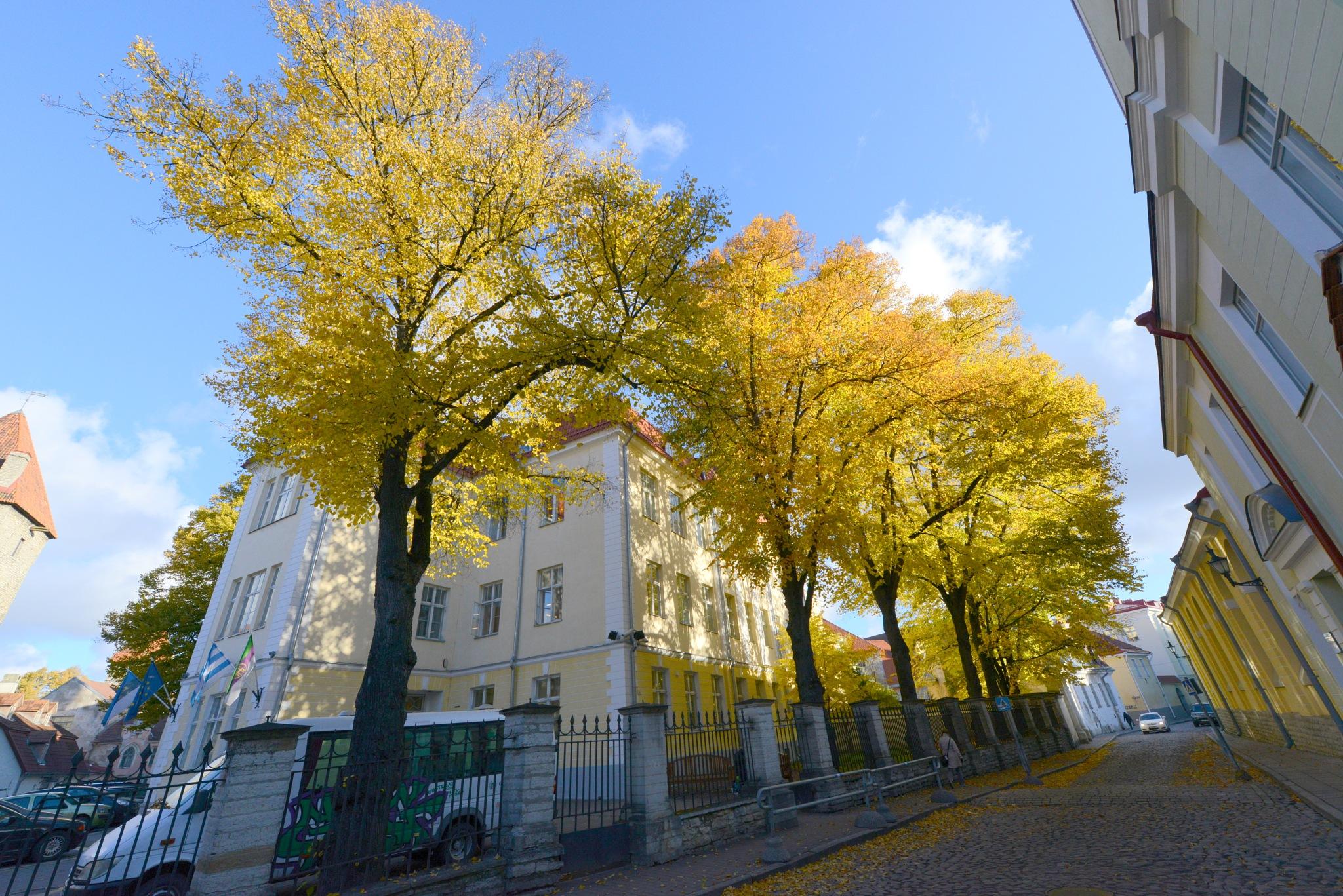 Tallinn, old city by Lasse Tur