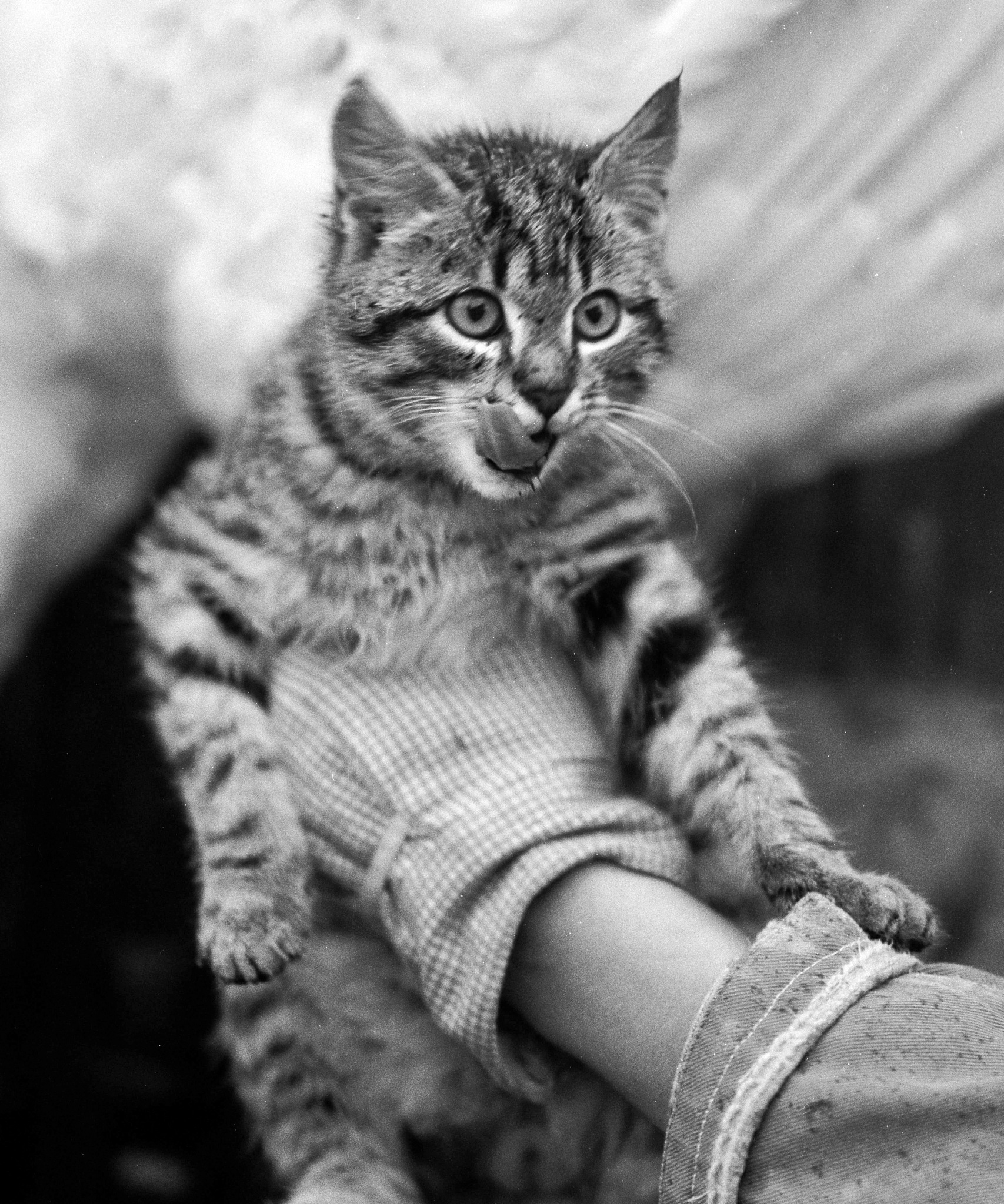 Cat, Leopold or short form Leo by Lasse Tur