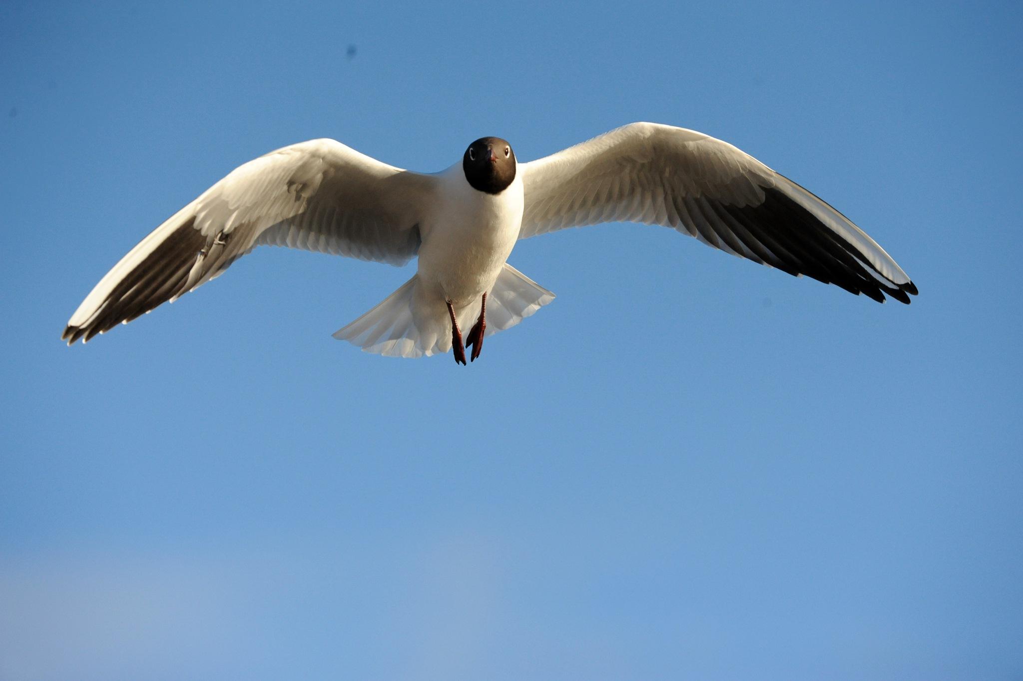Fugl - bird by Lasse Tur