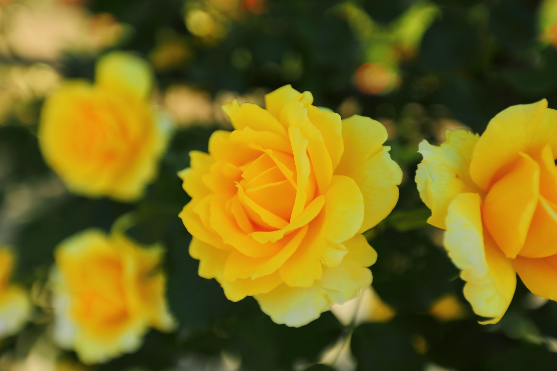 Fresh Yellow by takashi.mizoguchi
