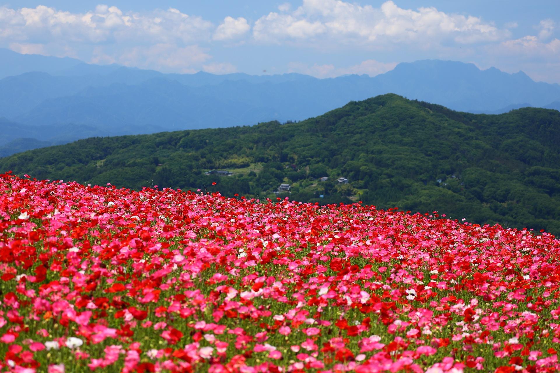 Flower Landscape by takashi.mizoguchi