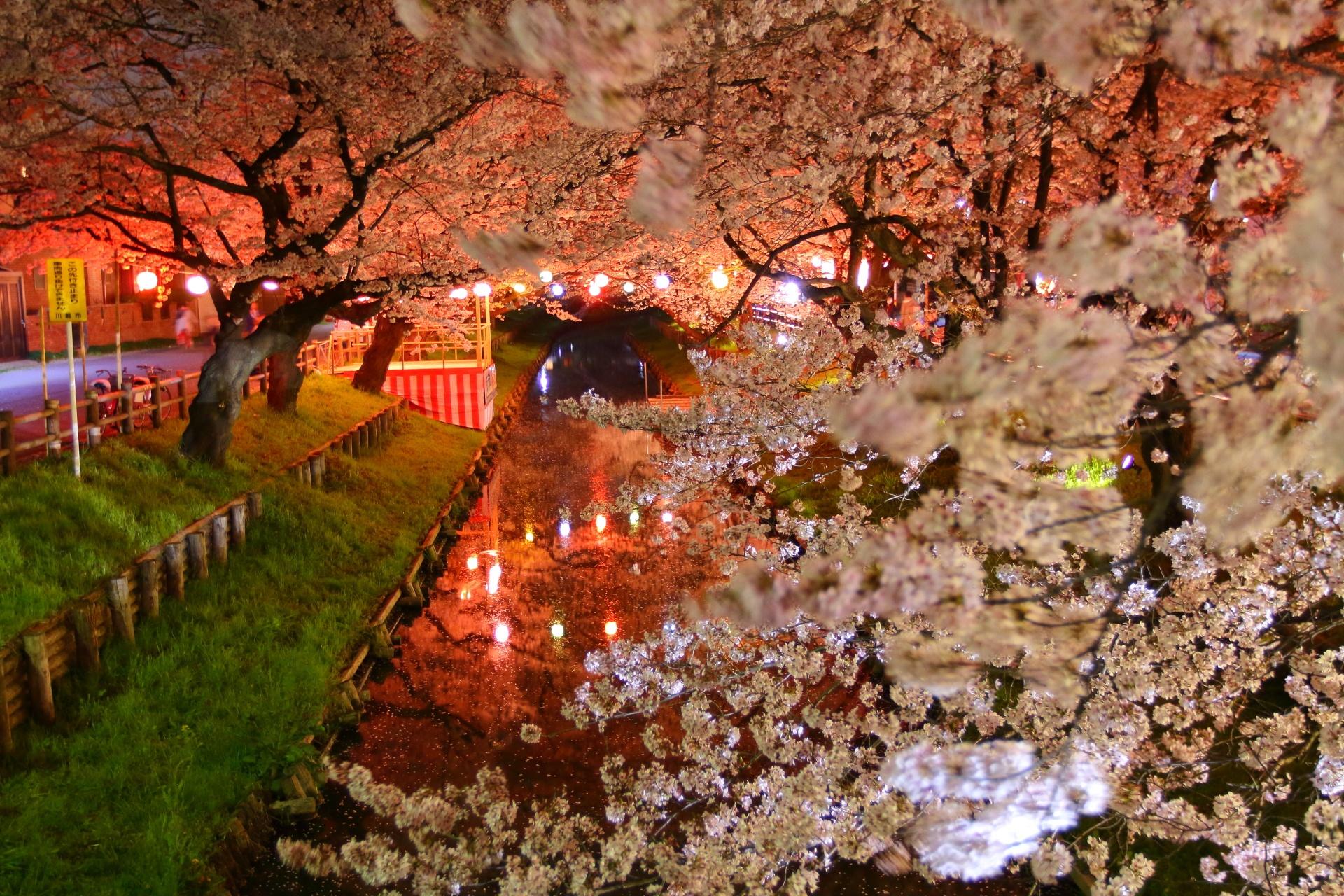 Cherry Blossom at Night by takashi.mizoguchi