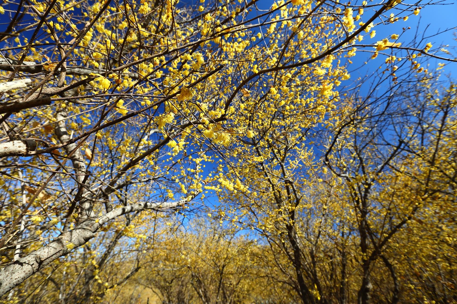 Yellow Field by takashi.mizoguchi