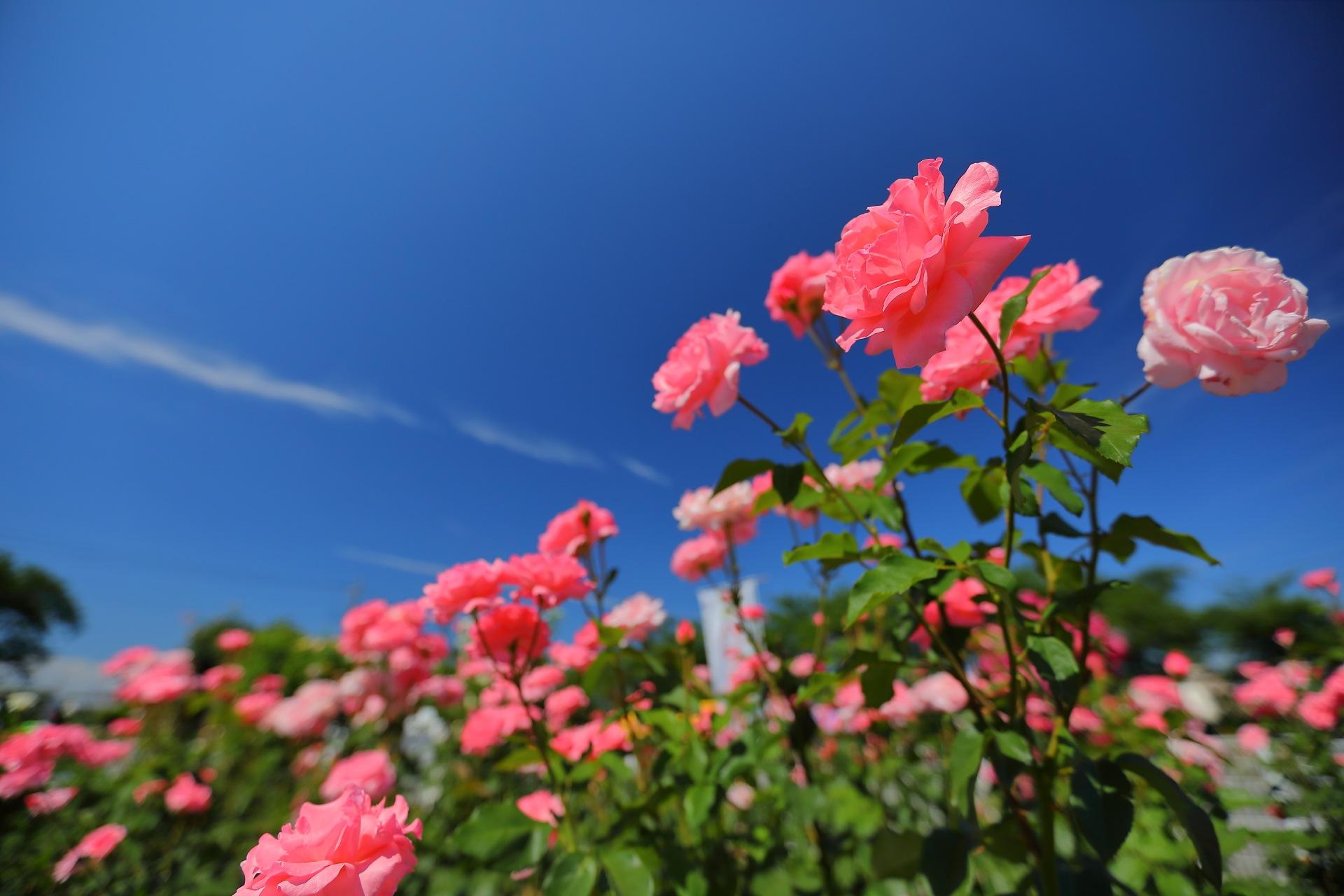 Pink Sky by takashi.mizoguchi