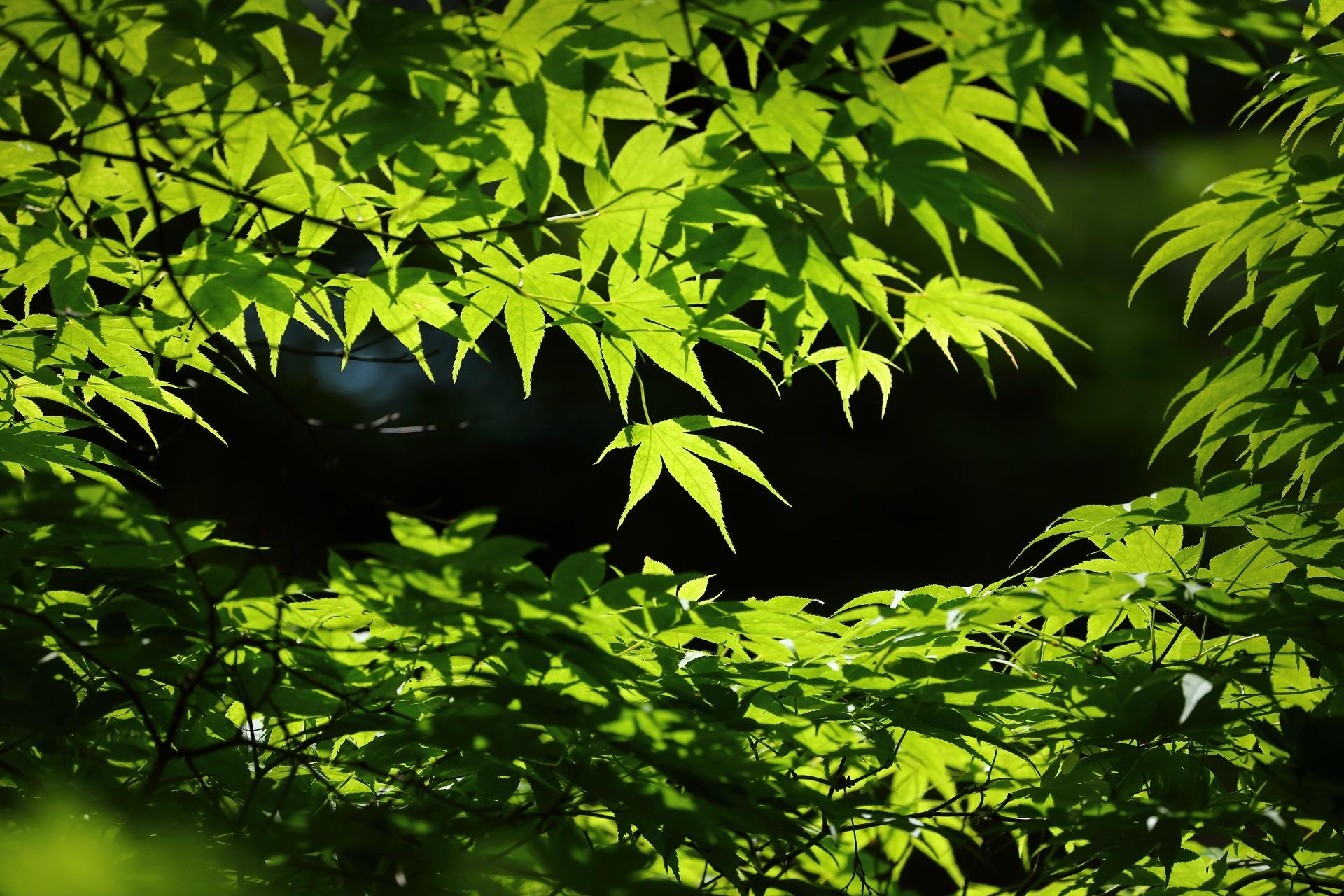 Early Summer Green by takashi.mizoguchi