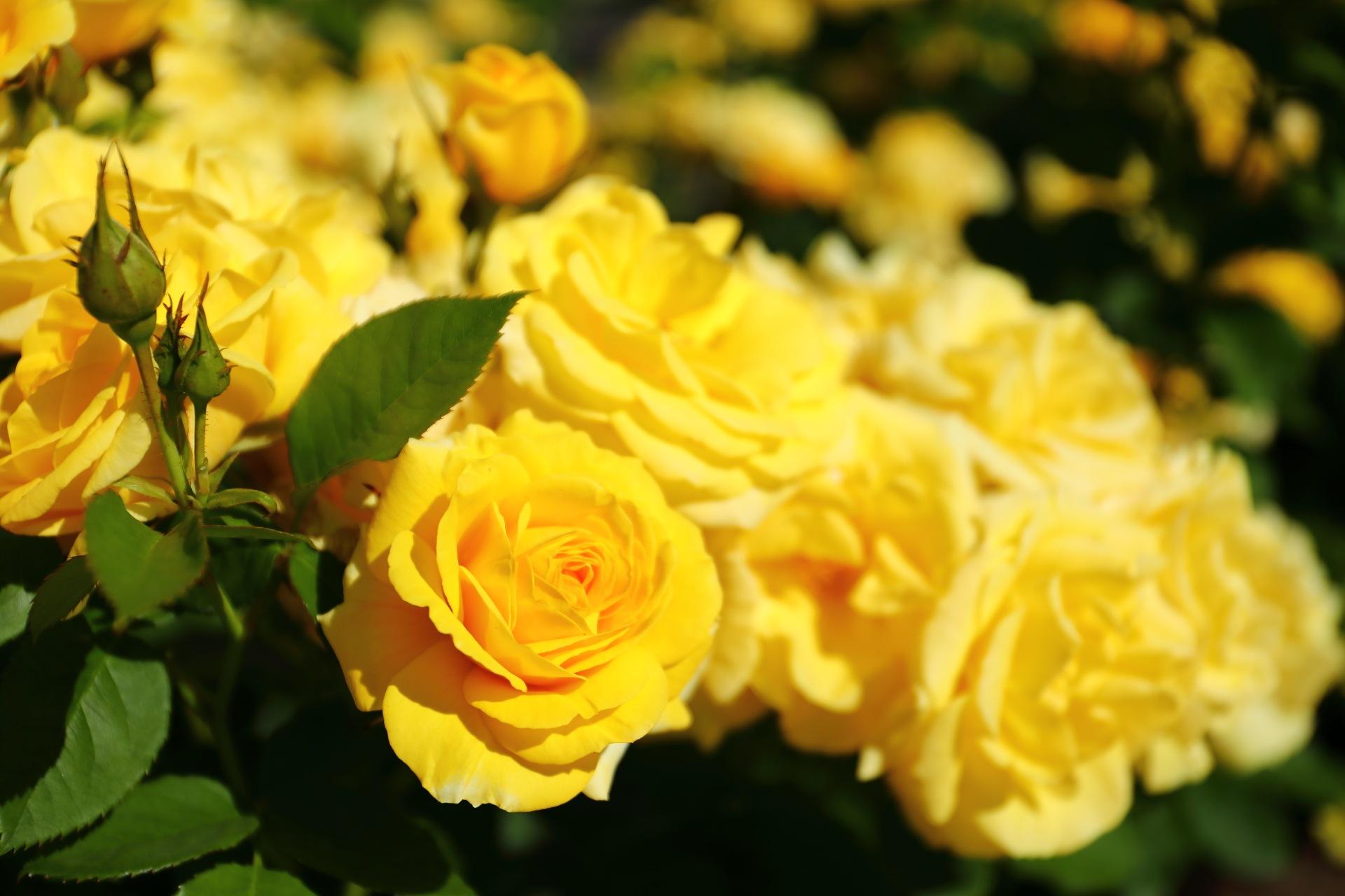 Yellow Fantasy by takashi.mizoguchi