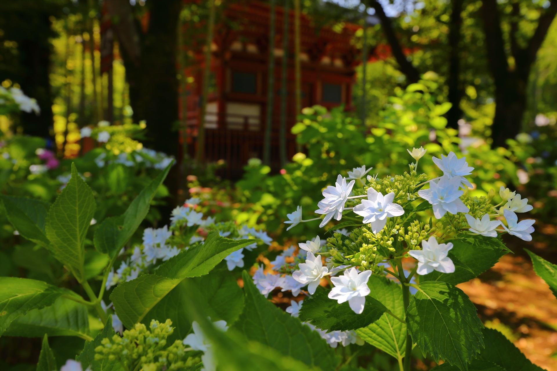 Hydrangea Area by takashi.mizoguchi