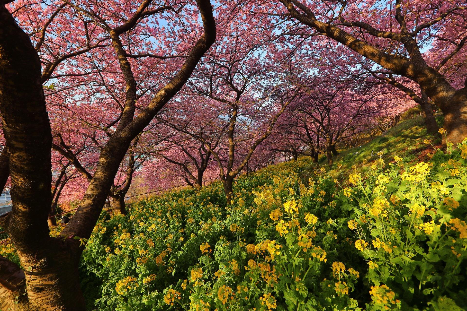 Depth by takashi.mizoguchi