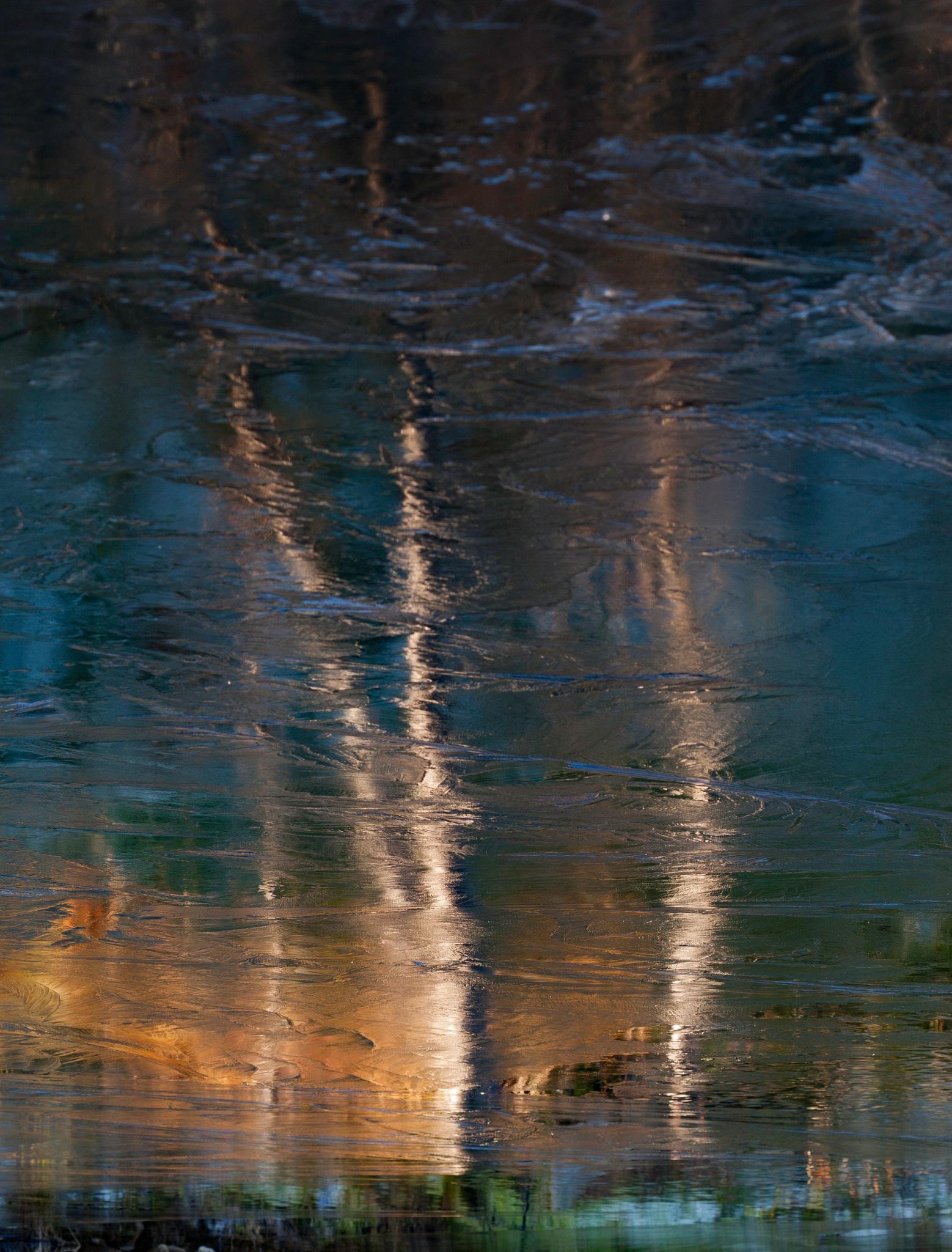 Birch on ice! by sveinsen