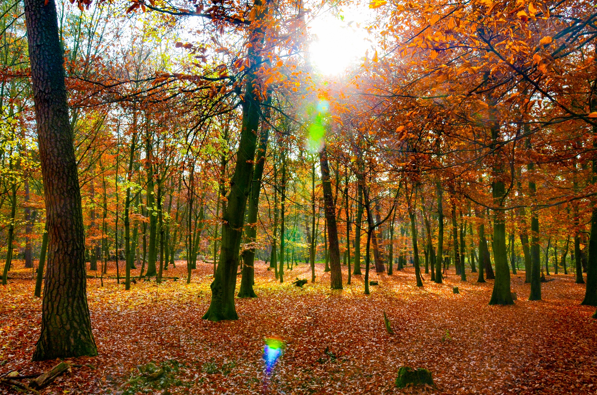 Colours of autumn by Michael Näther