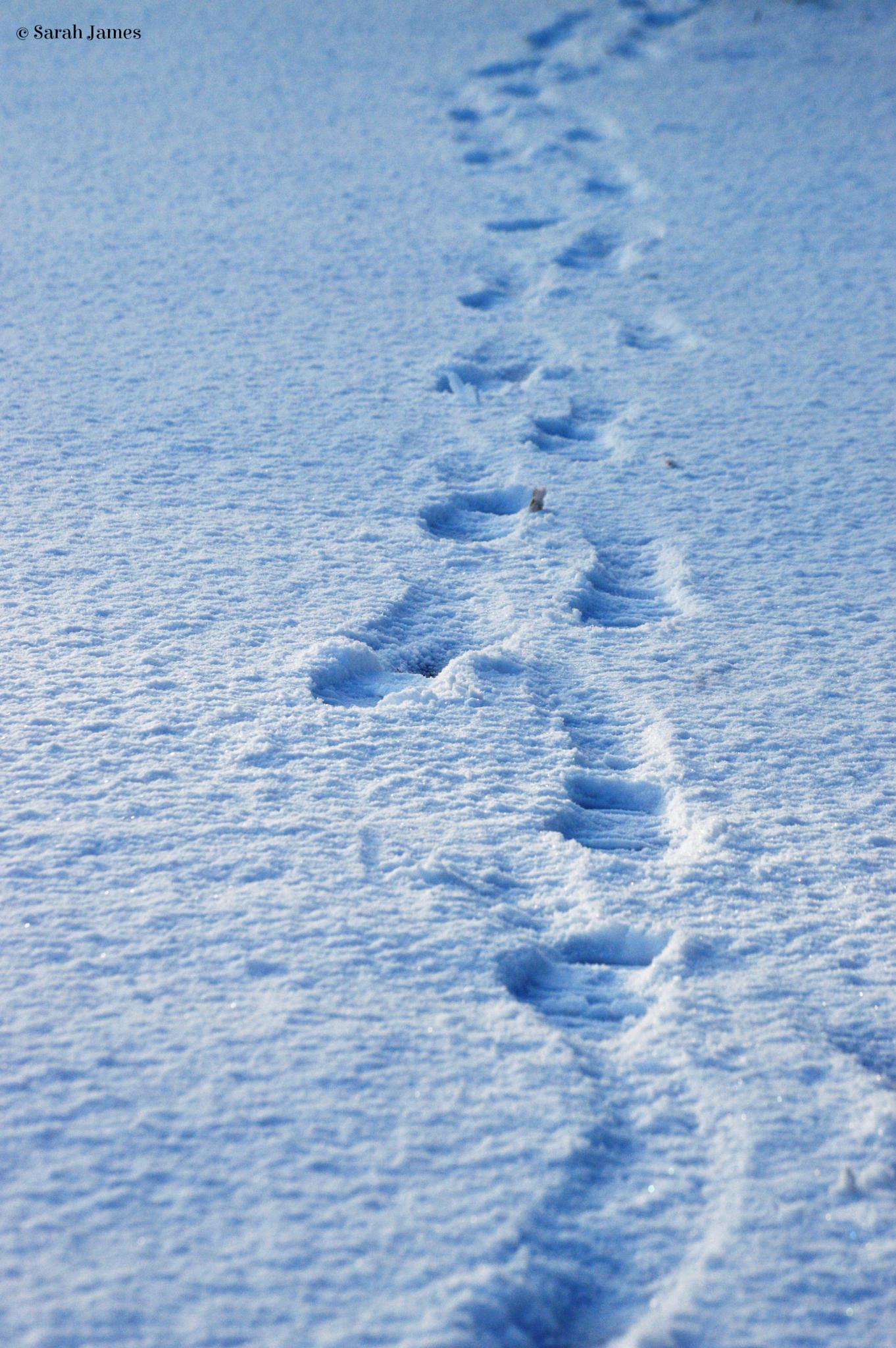 Footsteps in the snow by Sarah James