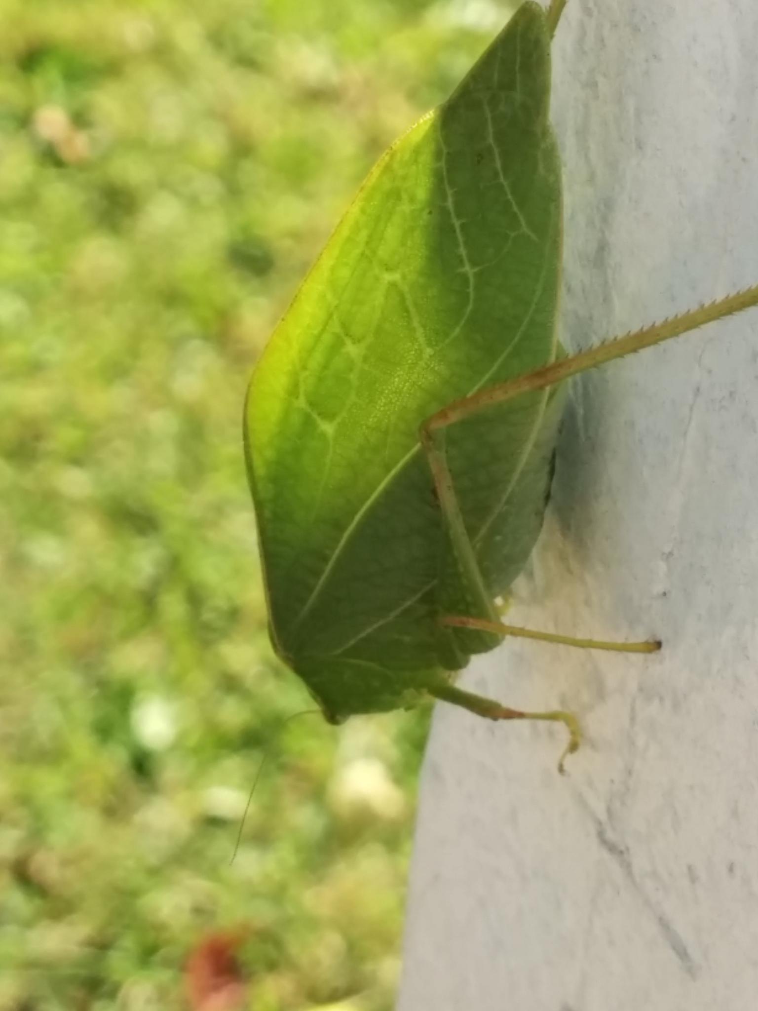 Loots like a green leaf :) by sameh.bebawy.1