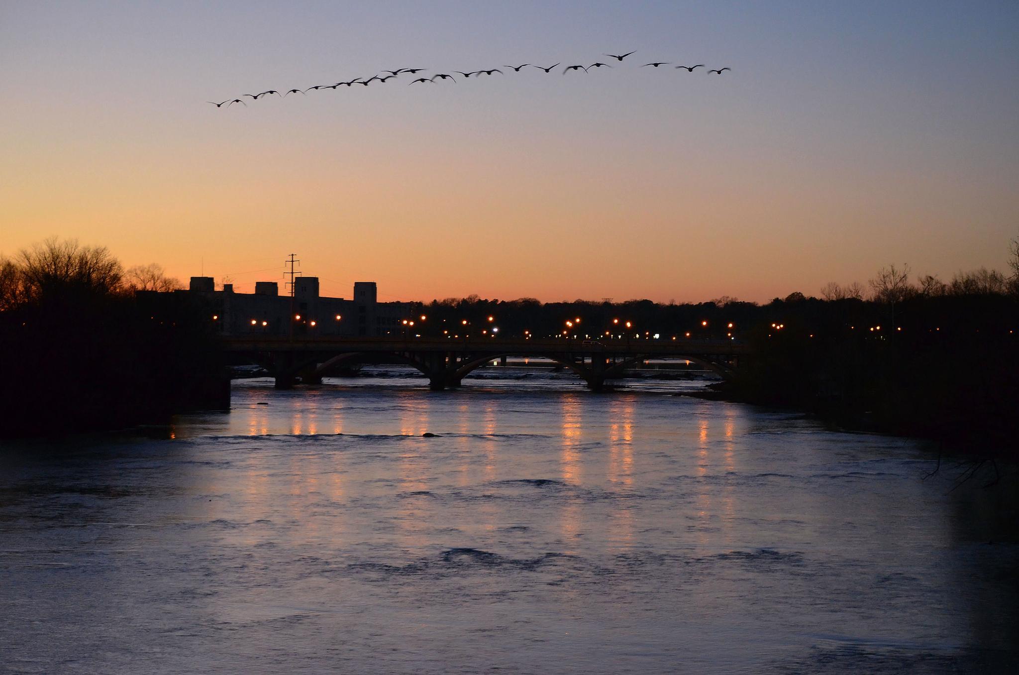 Evening Flight by JimFleenor