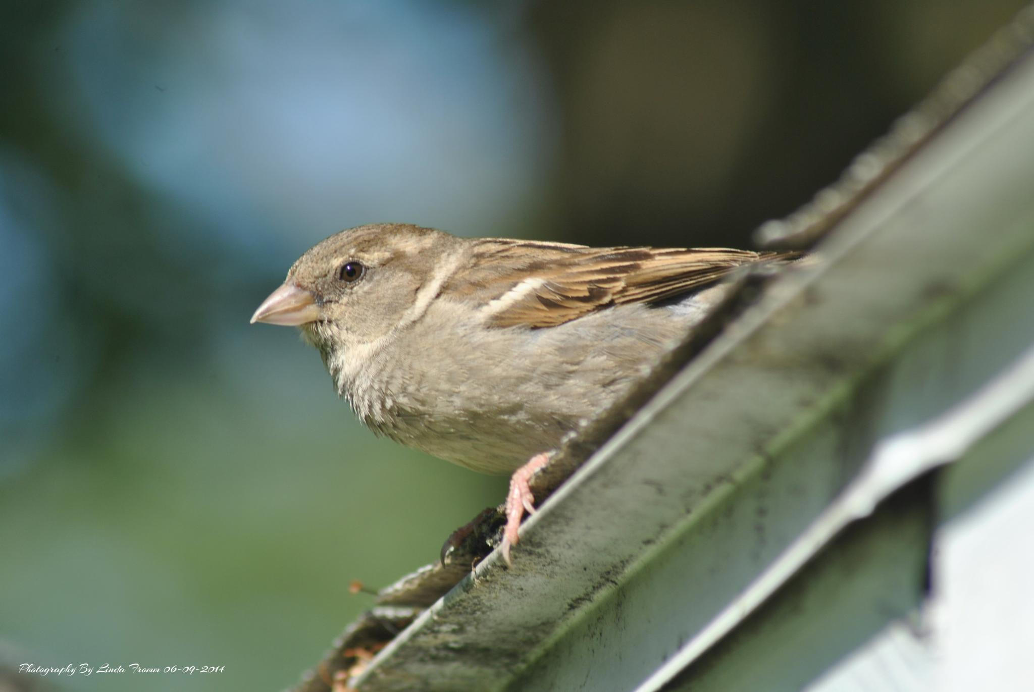 Bird 3 by Linda Gifford
